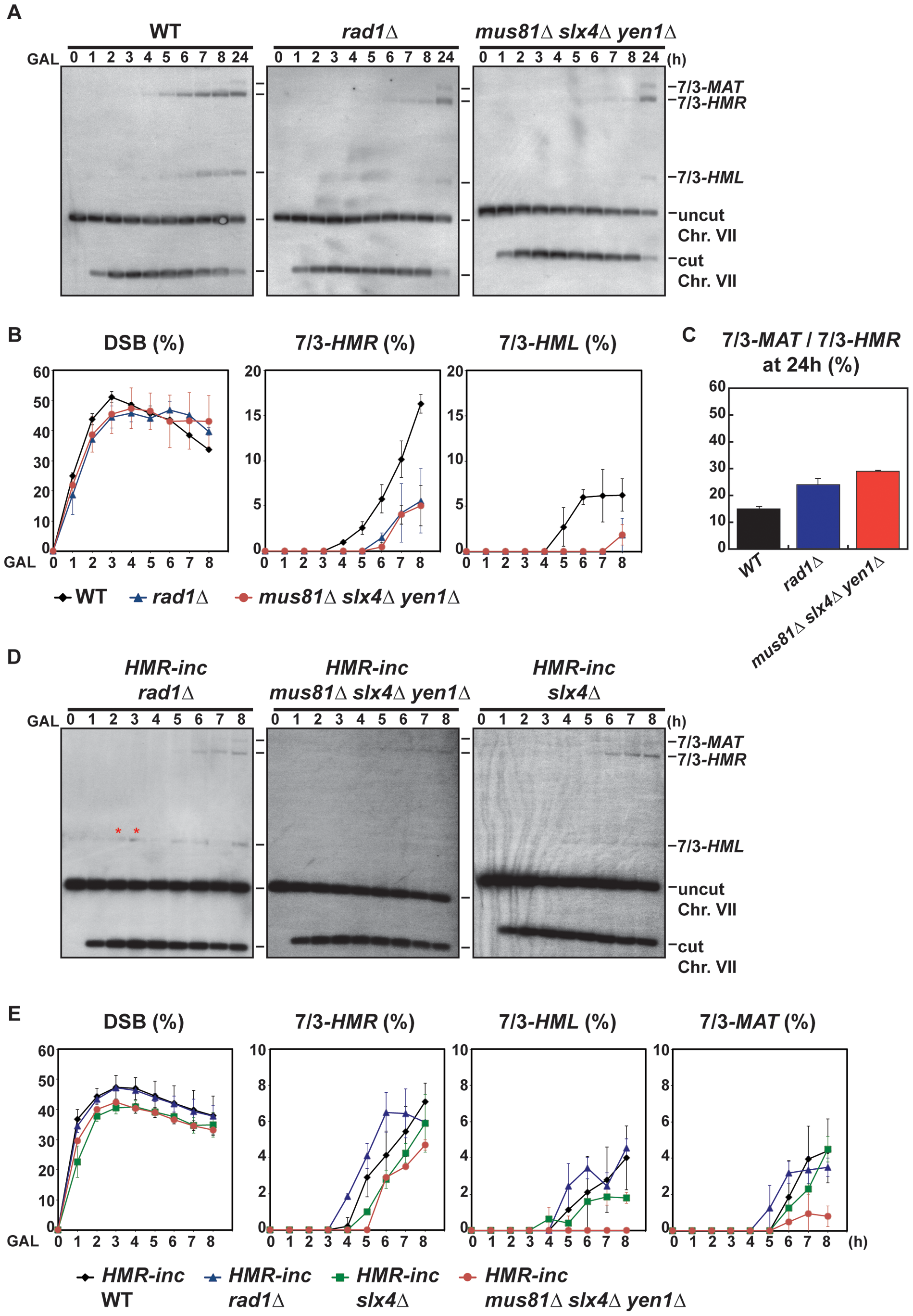 Template switching is affected in <i>mus81Δ slx4Δ yen1Δ</i> but not in <i>rad1Δ</i> mutants.