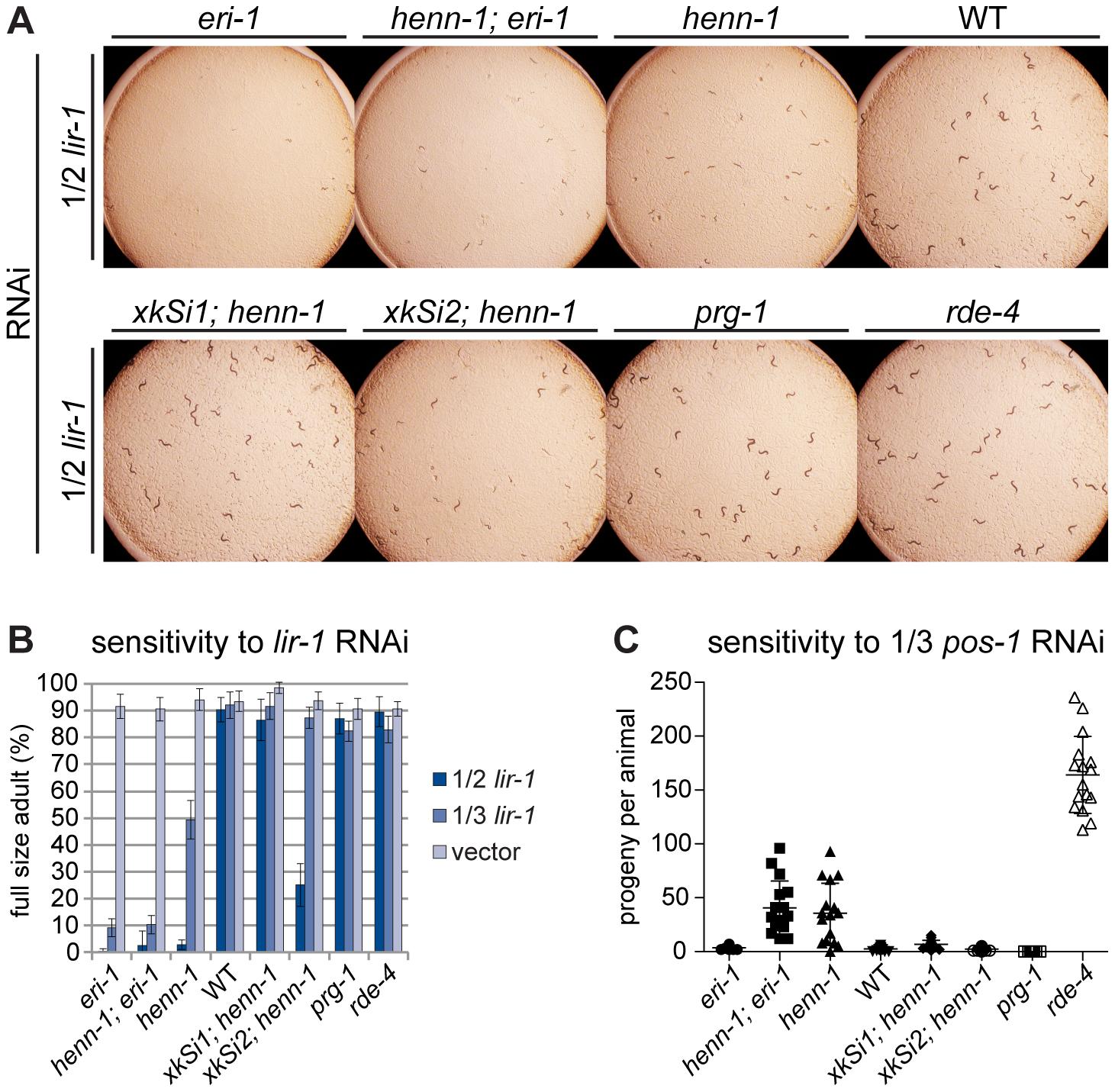 The <i>henn-1</i> Mutant Exhibits Opposite RNAi Sensitivity Phenotypes in Soma and Germline.