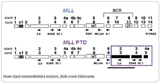 MLL protoonkogén a MLL PTD [18].