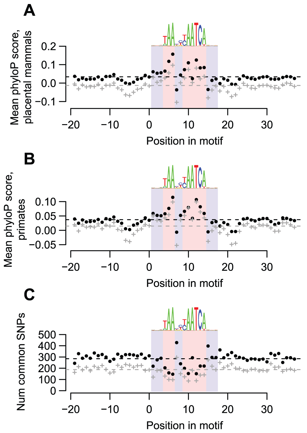 DUX4-bound motifs are evolutionarily conserved.