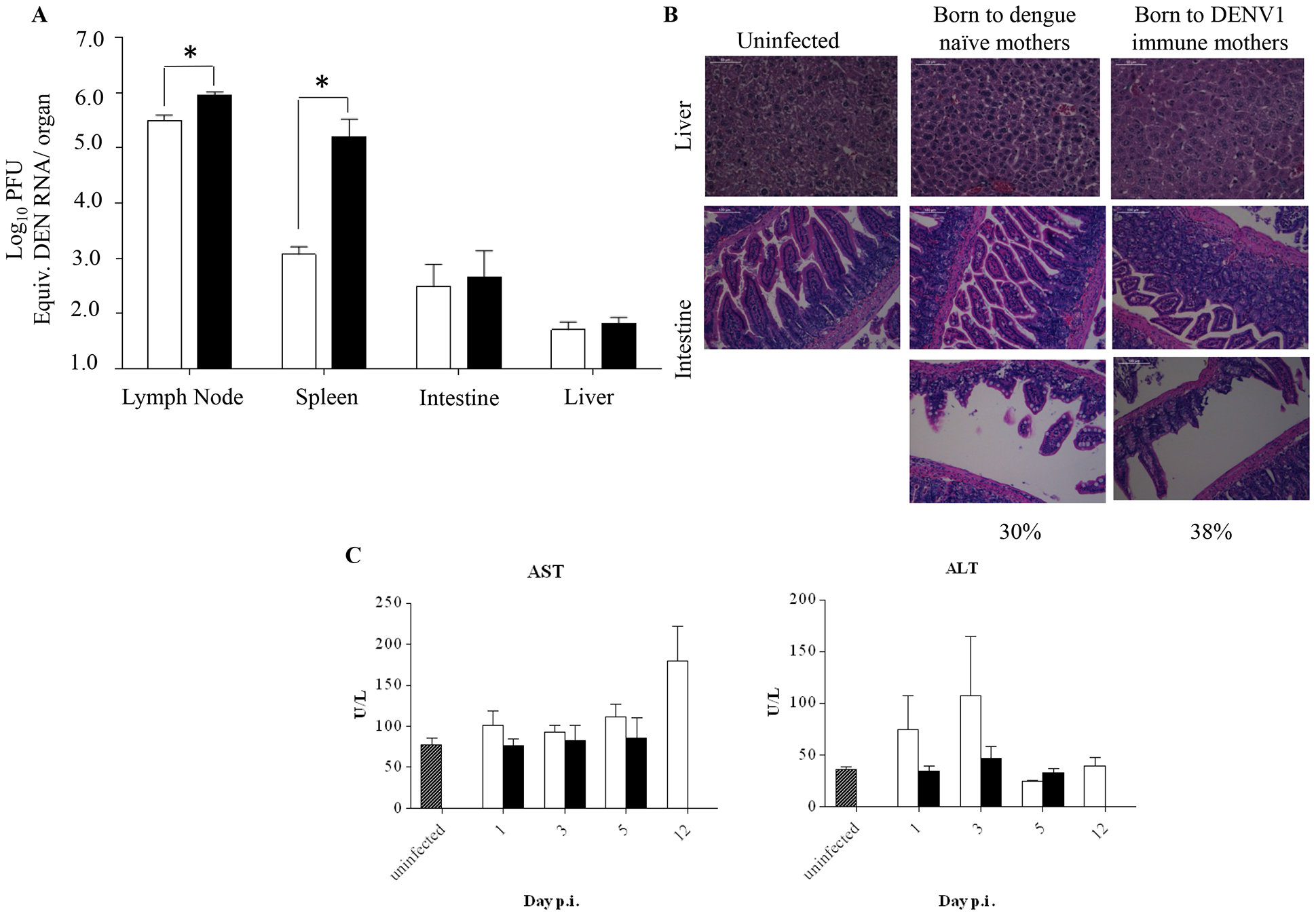 Viral load and histology analysis in DENV2-infected mice born to either DENV1 immune or dengue naïve mothers.