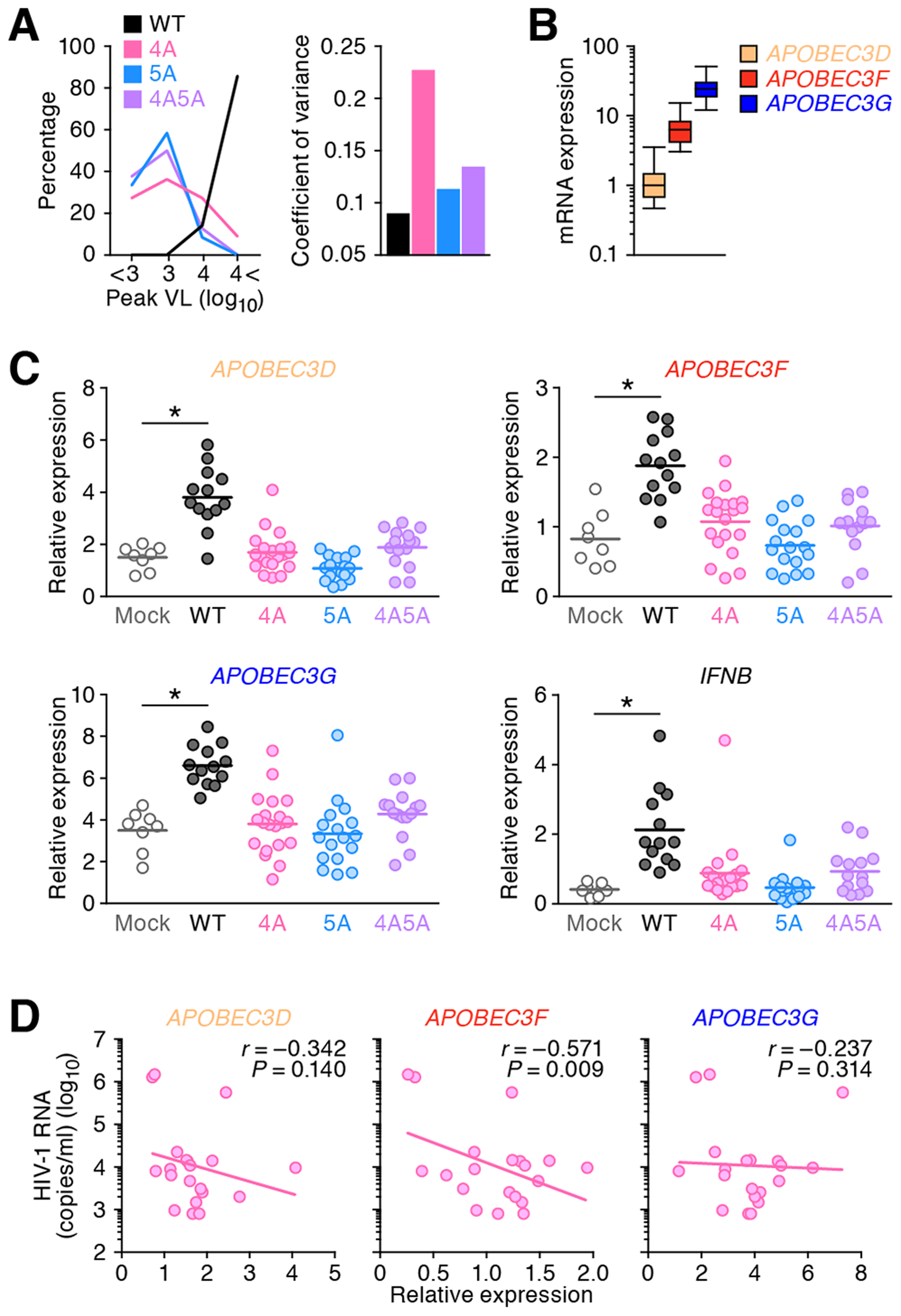 Expression levels of <i>APOBEC3</i> and <i>IFNB</i> in infected humanized mice.