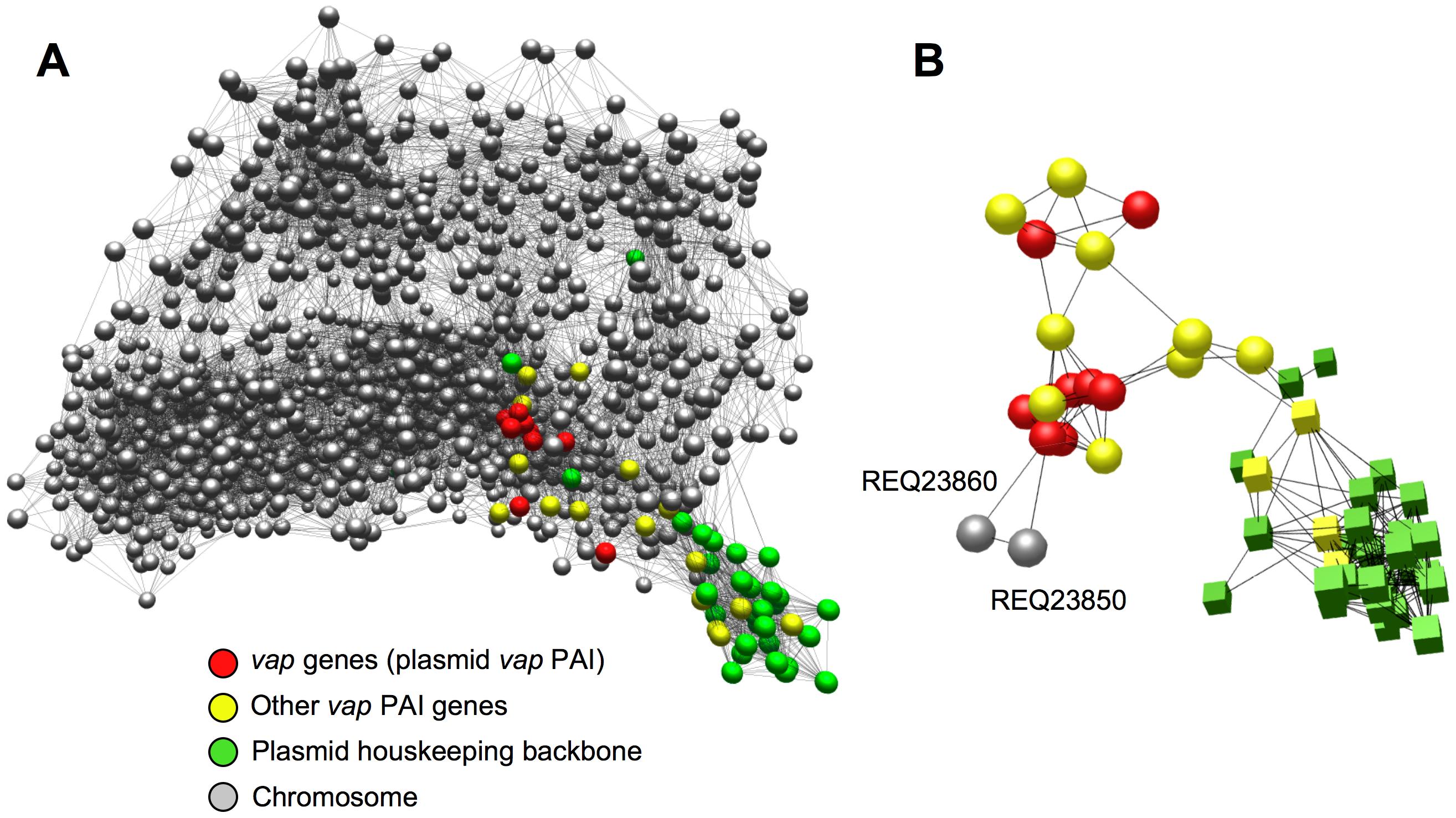 Network analysis of virulence plasmid–chromosome regulatory crosstalk.