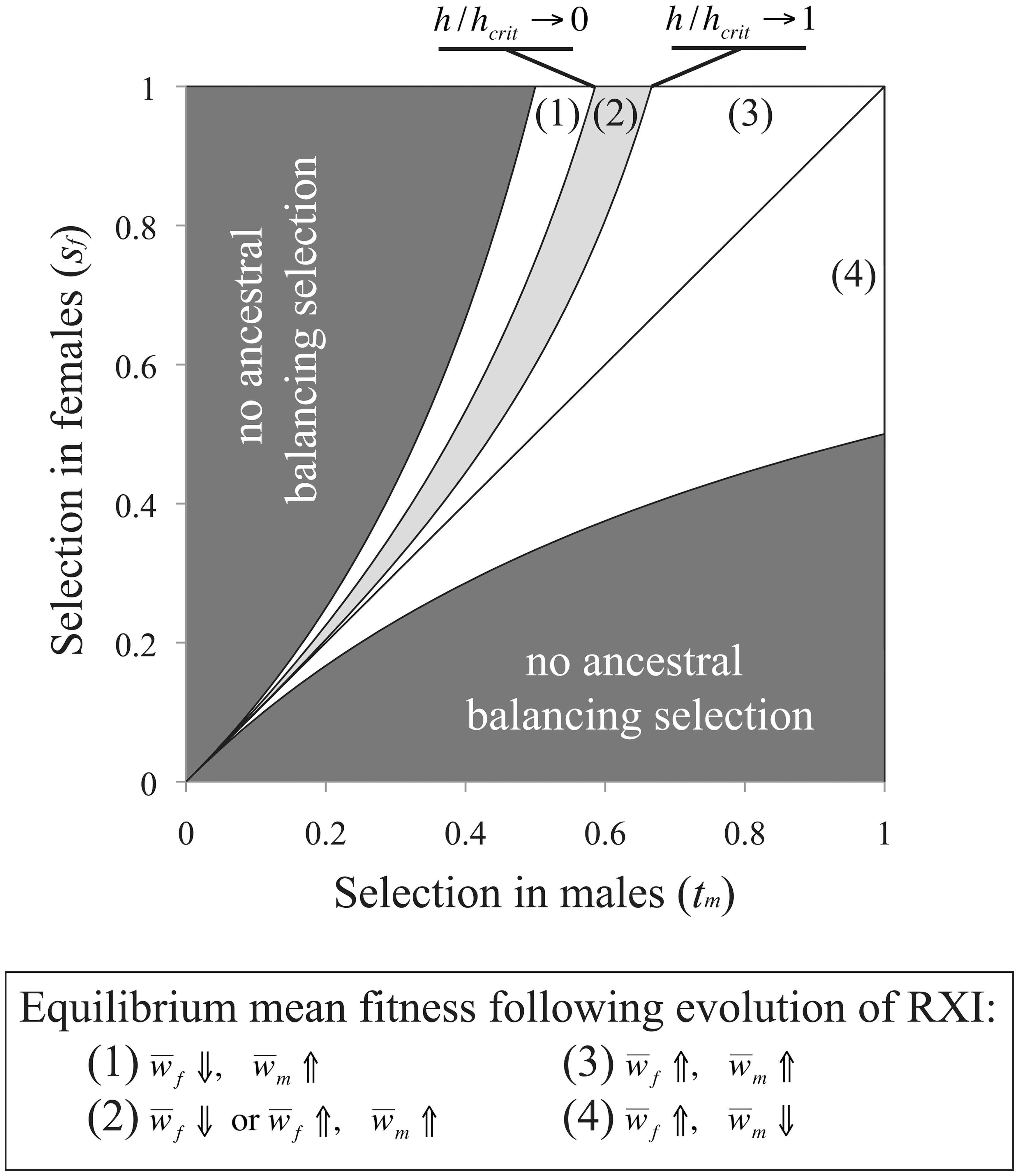 Sexually antagonistic fitness variation and the change in mean fitness following the evolution of RXI.