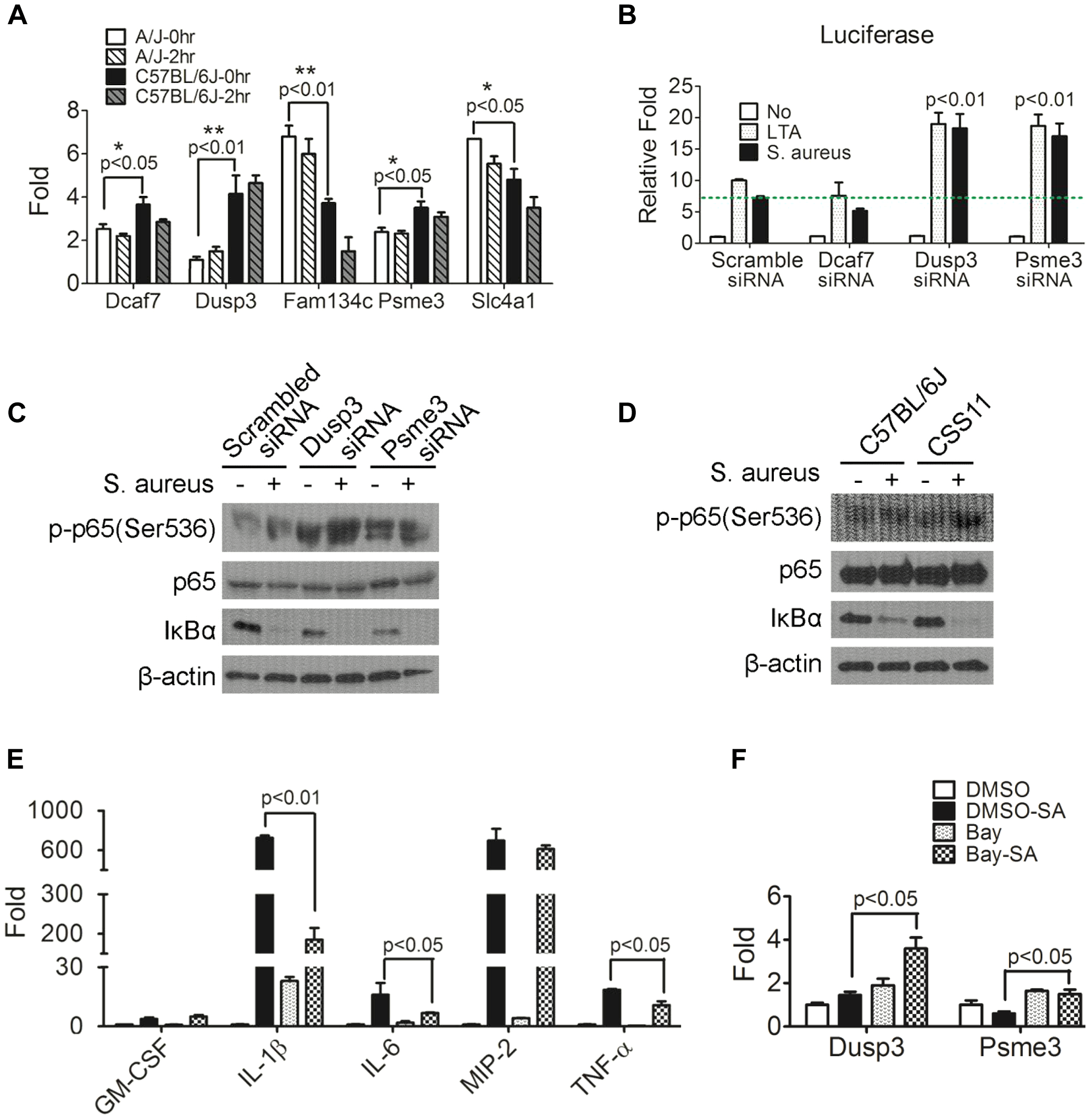 Down-regulation of <i>Dusp3</i> and <i>Psme3</i> in A/J are responsible for increased NF-κB signaling activity.