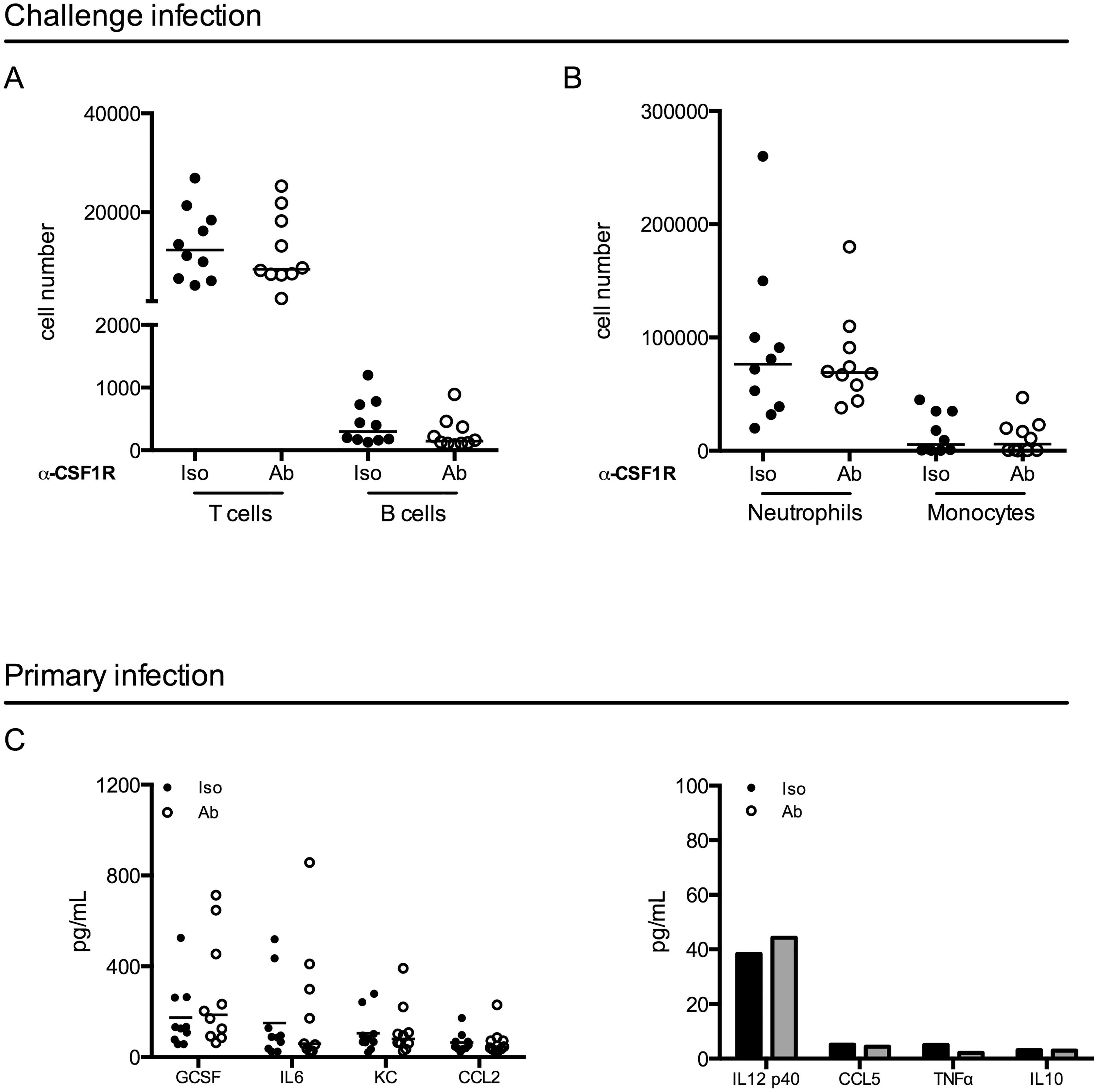Macrophage depletion does not impact effector cell infiltration or cytokine expression.