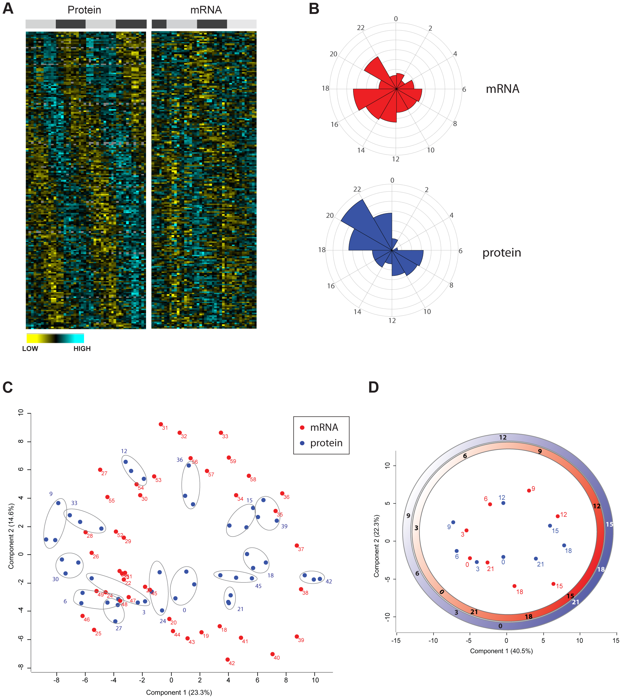 Divergence in the temporal profile of mouse liver proteome and transcriptome.