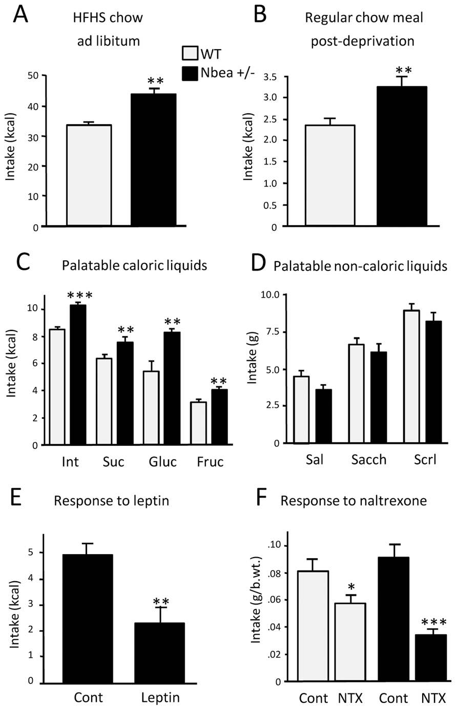 Differential feeding behavior of <i>Nbea+/−</i> and WT mice.