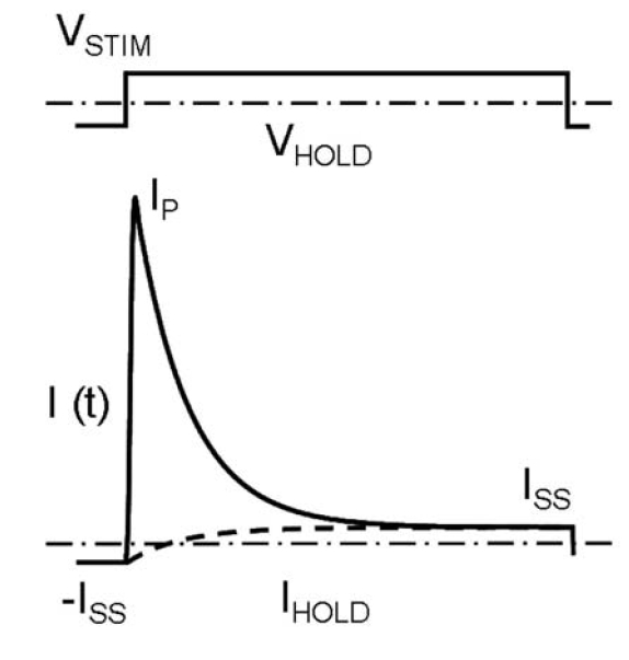 Fig. 2: The principle of the cell current response correction. VSTIM – voltage stimulus, VHOLD – holding voltage, I(t) – the whole circuit current response, IHOLD – holding current. Dashed line – the correct exponentially increasing current through the resistive path of the equivalent circuit. Dotted line – the steady state current. The correct membrane capacitance charging current corresponds to the difference between currents shown as solid and dashed lines.