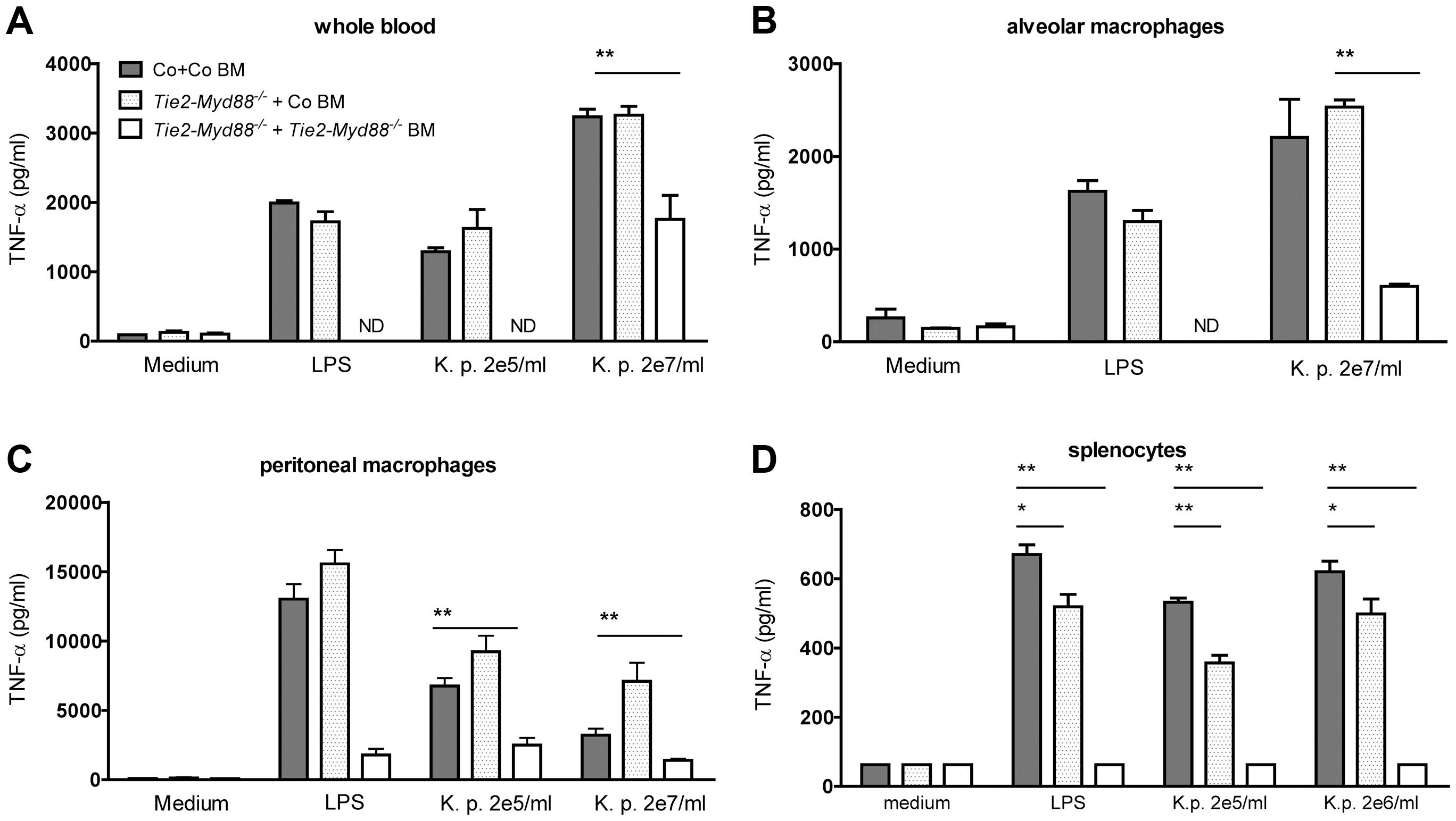 Bone marrow transfer restores responsiveness of hematopoietic cells from Tie2-<i>Myd88<sup>−/−</sup></i> mice to <i>Klebsiella</i>.