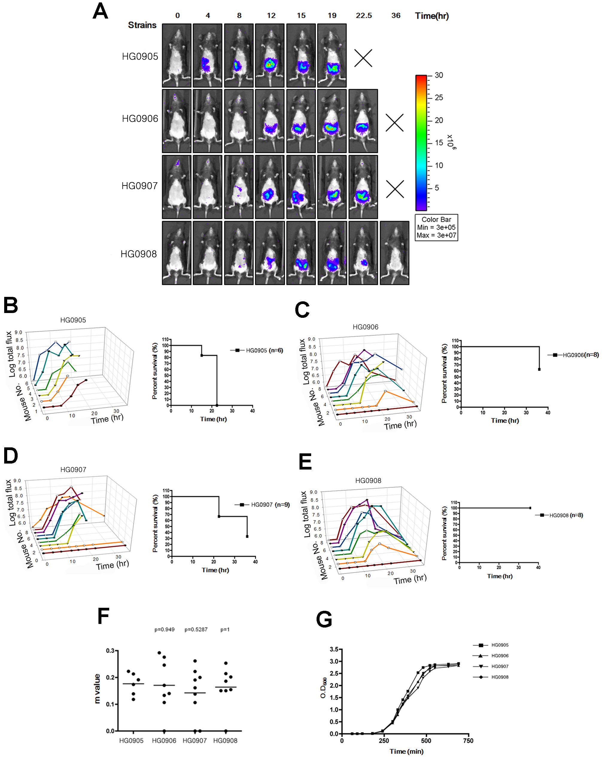 Bioluminescence quantification and lethality measurement in mice infected with <i>V. vulnificus</i> strains containing pHGJ1.
