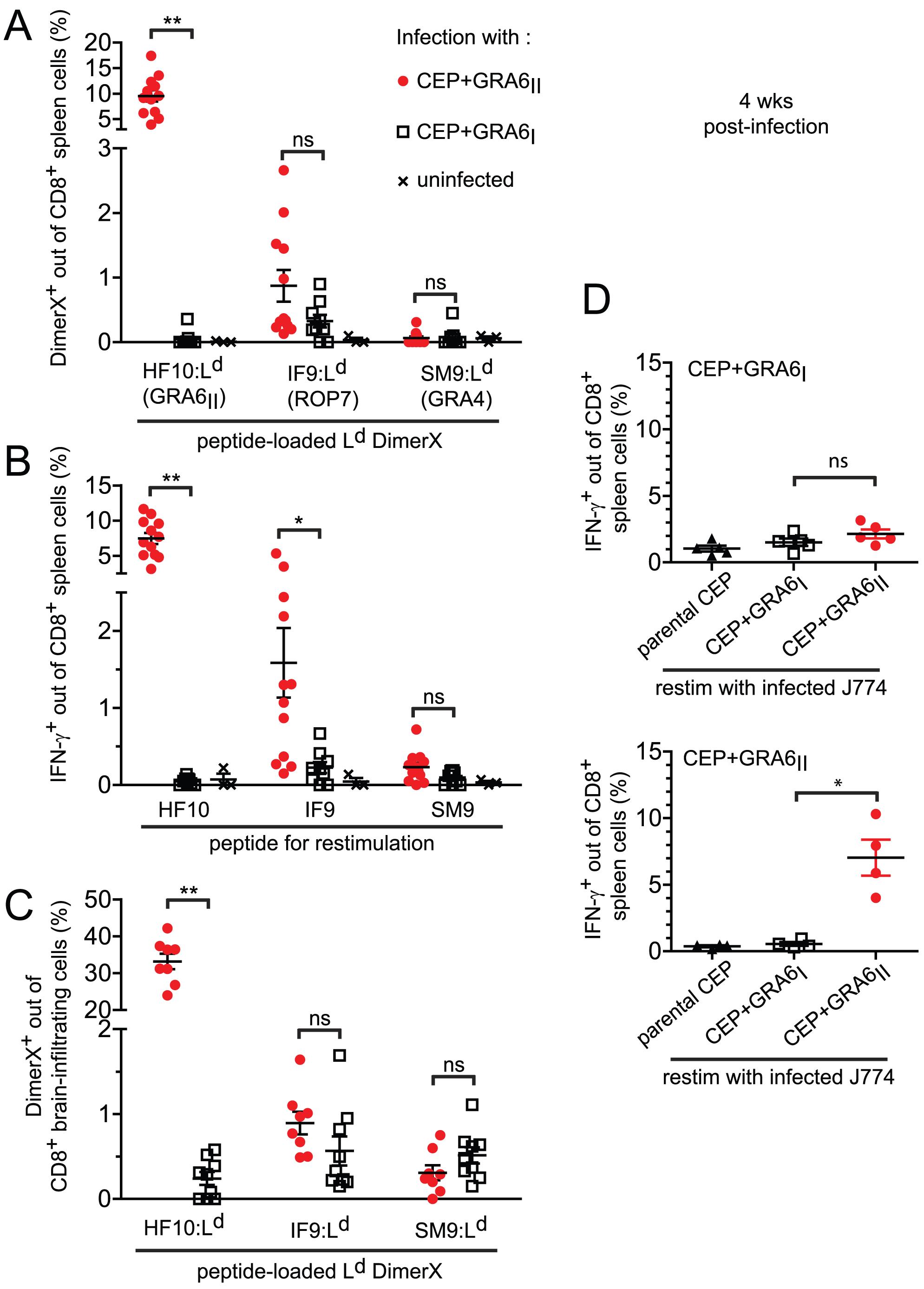 Immunodominance, but not immunodomination, of the GRA6<sub>II</sub>-derived HF10 peptide during chronic stage.