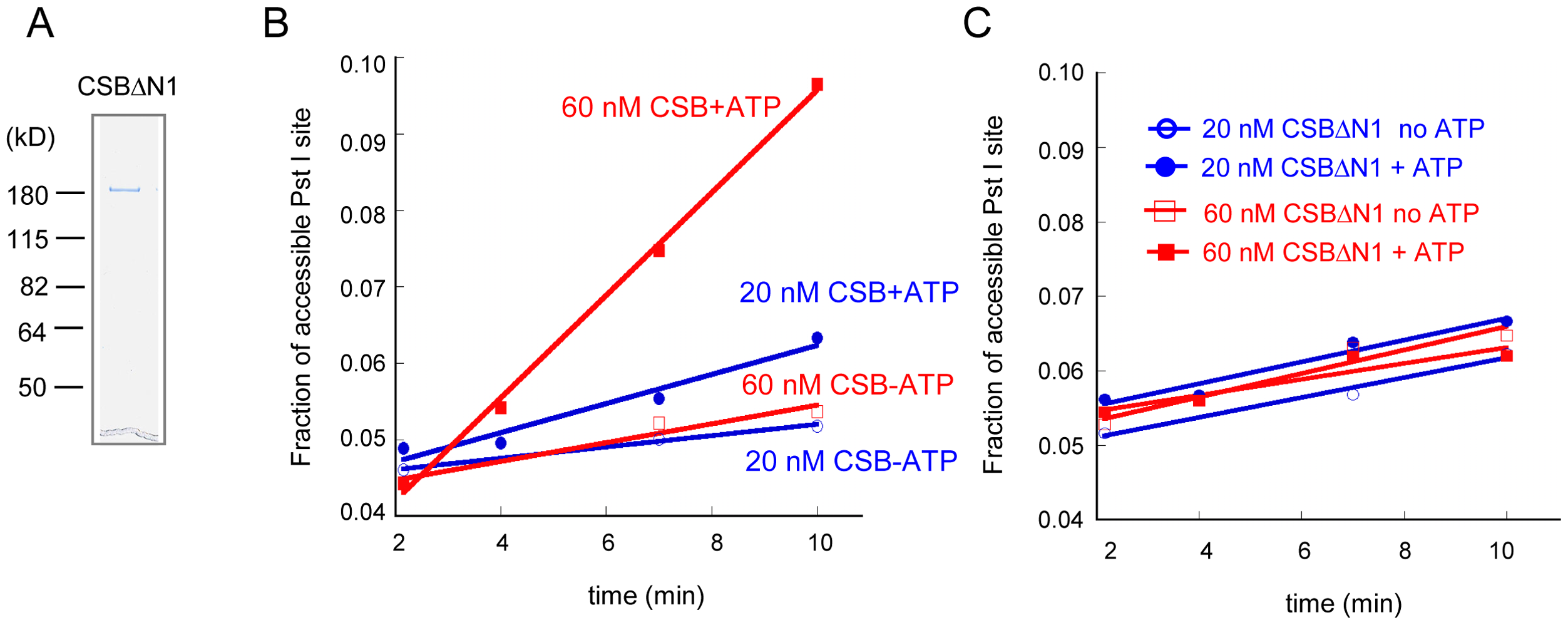The N1 Region of CSB Is Critical for Chromatin Remodeling.