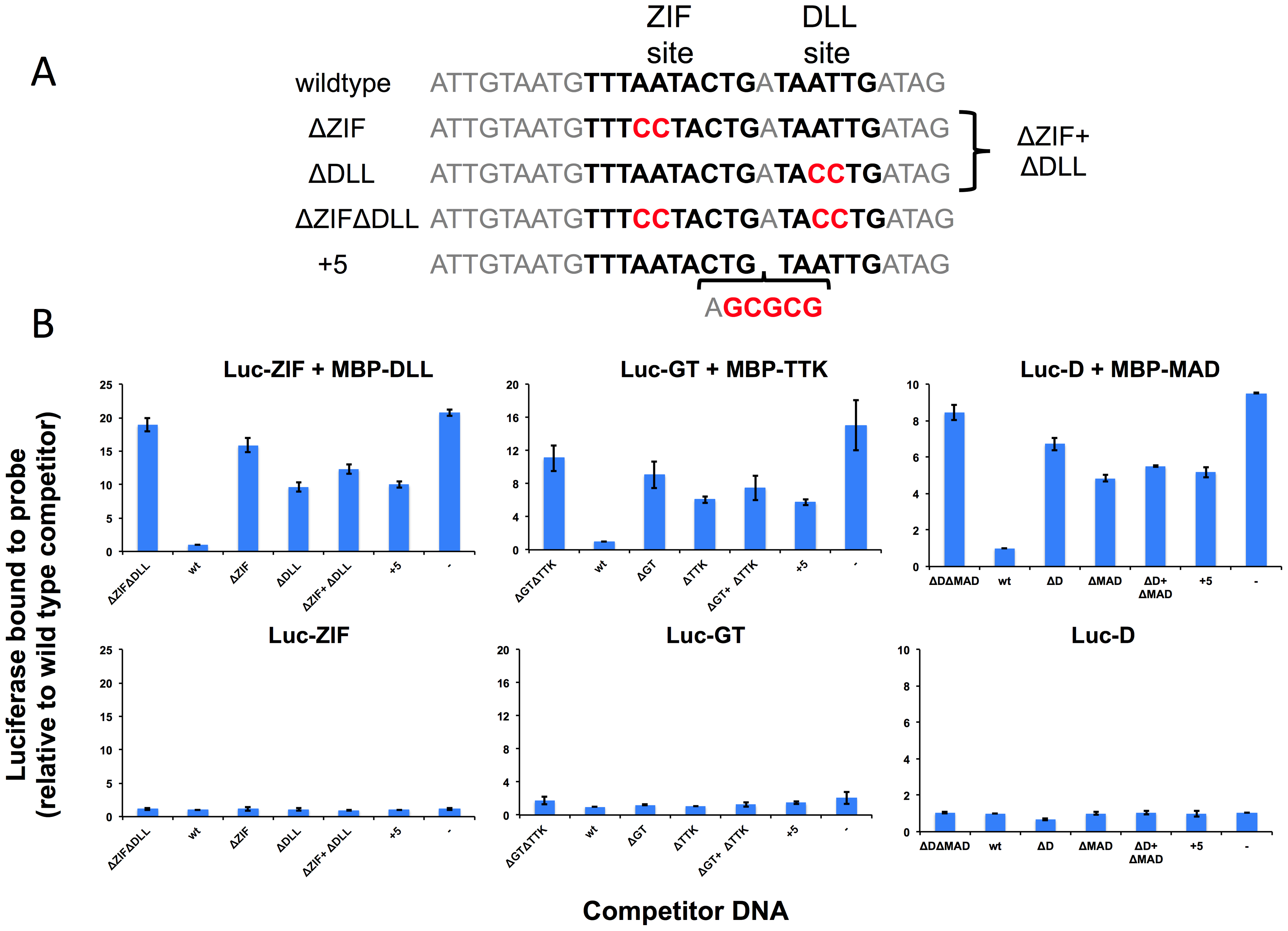 Experimental validation of predicted cooperative DNA binding by three TF pairs, ZIF with DLL, GT with TTK and D with MAD.