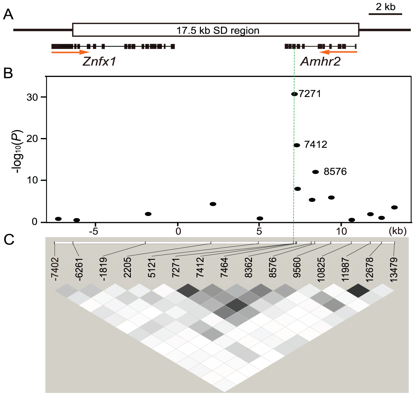 Association mapping of the sex-determining locus in a natural population of fugu.