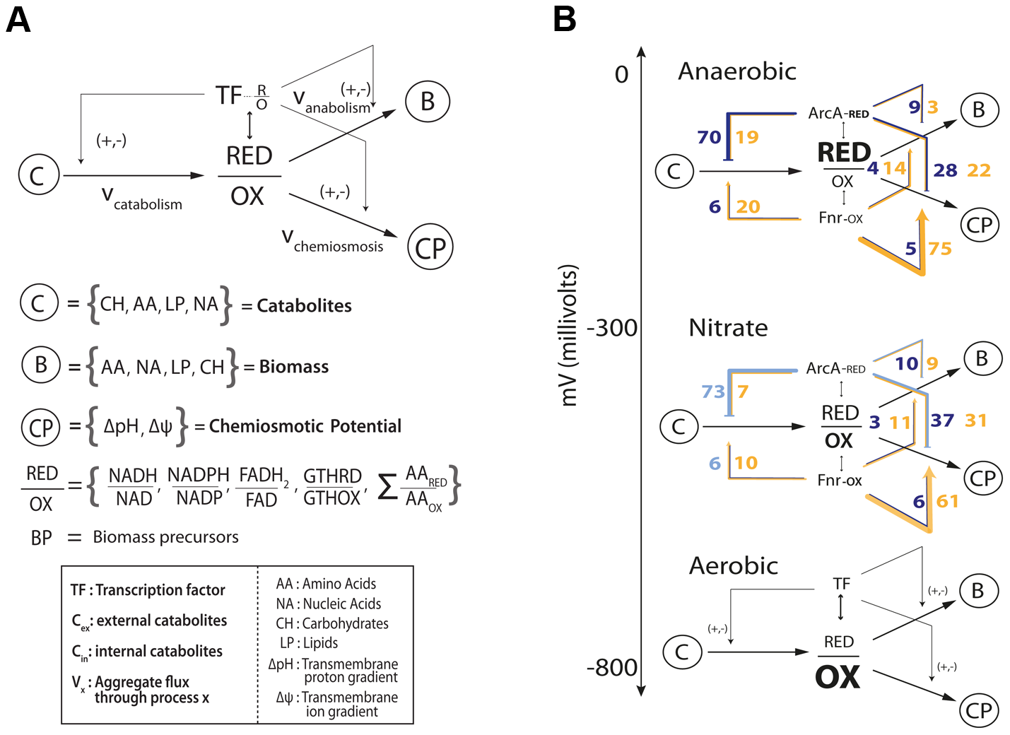 Flow based model of the metabolic-regulatory network explains regulation throughout the anaerobic shift.