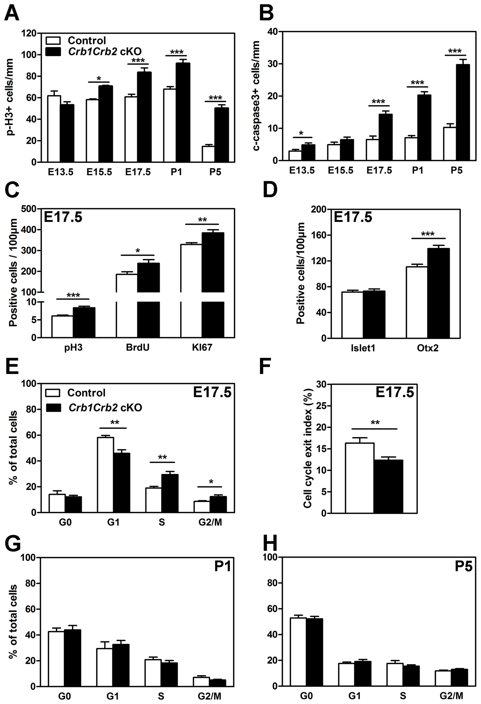 Loss of CRB1 and CRB2 leads to cell cycle defects, increased proliferation and apoptosis.
