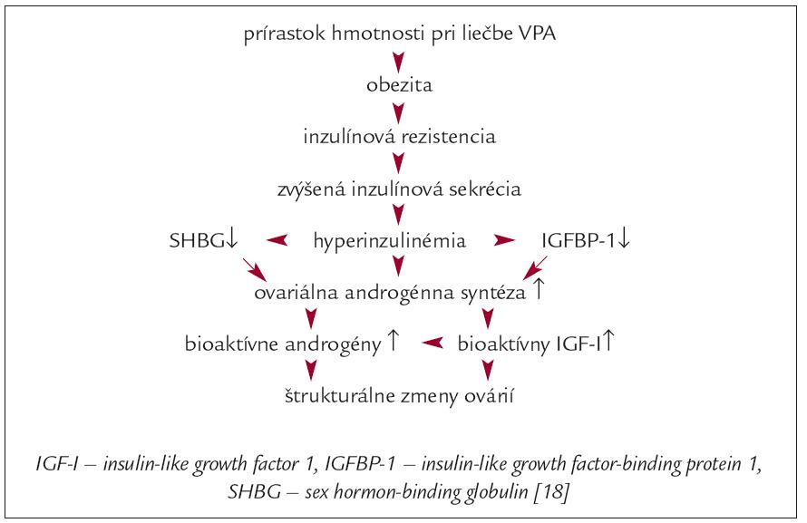 Možný patogenetický mechanizmus hyperandrogenizmu odvodeného od VPA a PCOS.