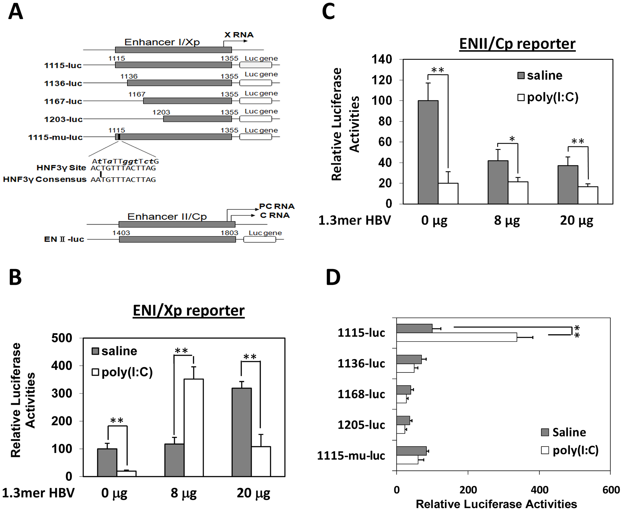 Effects of poly(I∶C) on HBV ENI/Xp and ENII/Cp in mice.