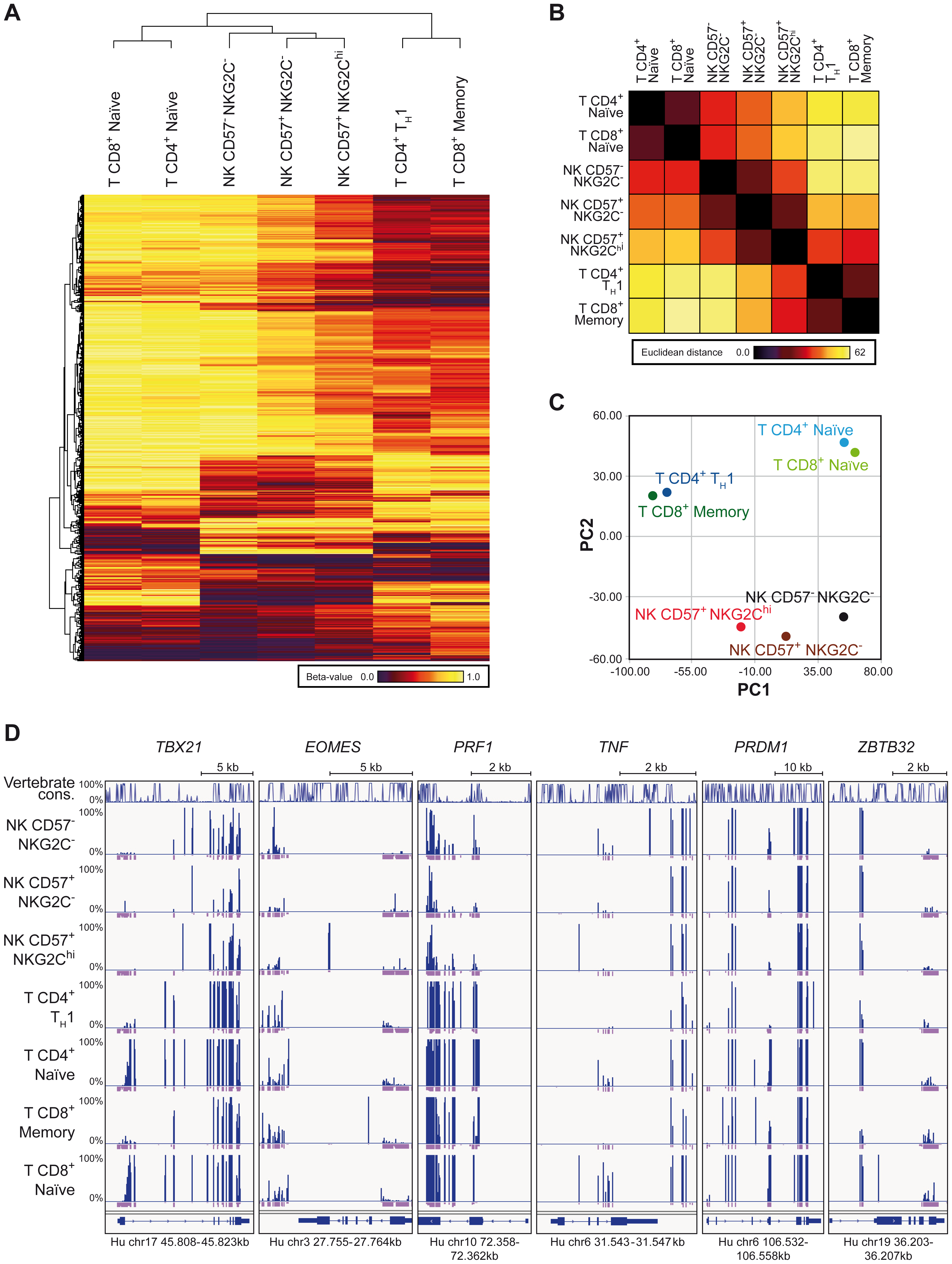 RRBS-based global methylation analysis of NK cell and T cell subsets.