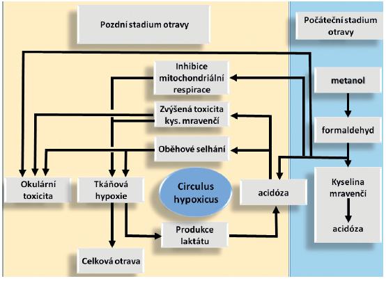 Schéma intoxikace metanolem Upraveno podle [4]