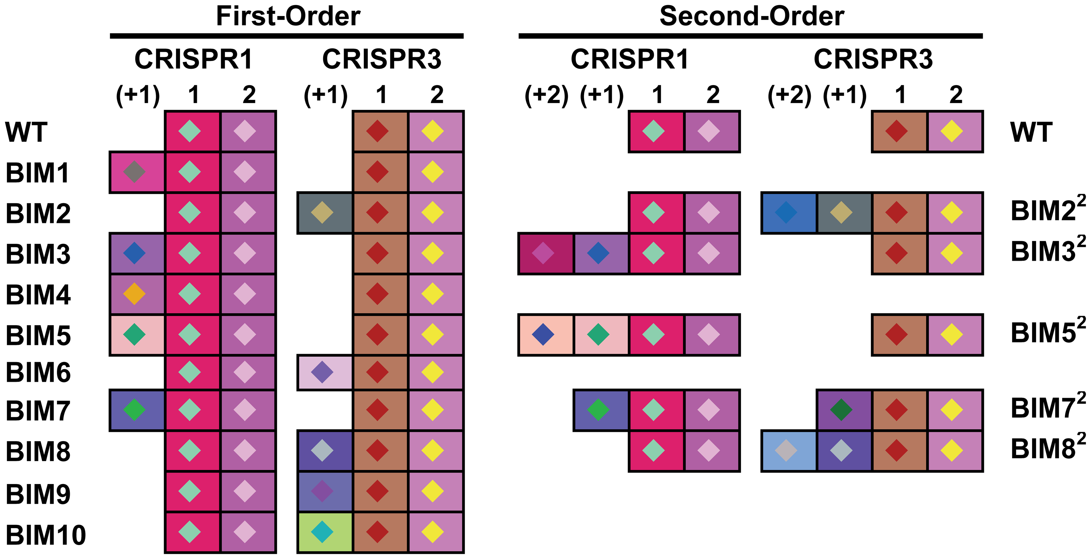 Graphical representation of spacers across the two CRISPR loci for <i>S. thermophilus</i> BIMs.