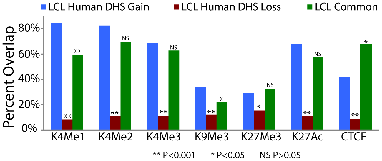 Species-specific DHS sites are associated with functional chromatin marks.