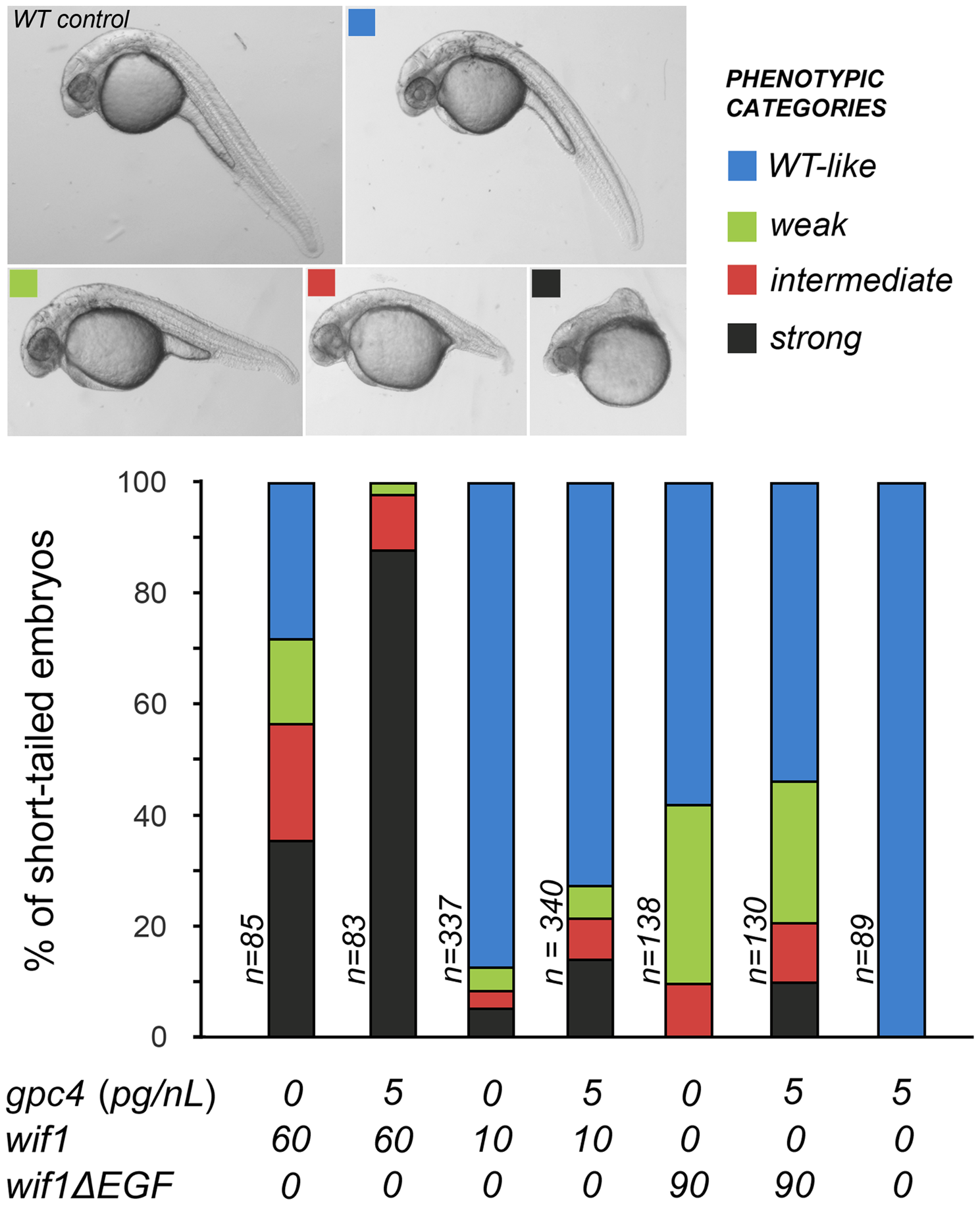 Gpc4 enhances the effects of full-length Wif1 in zebrafish embryos.