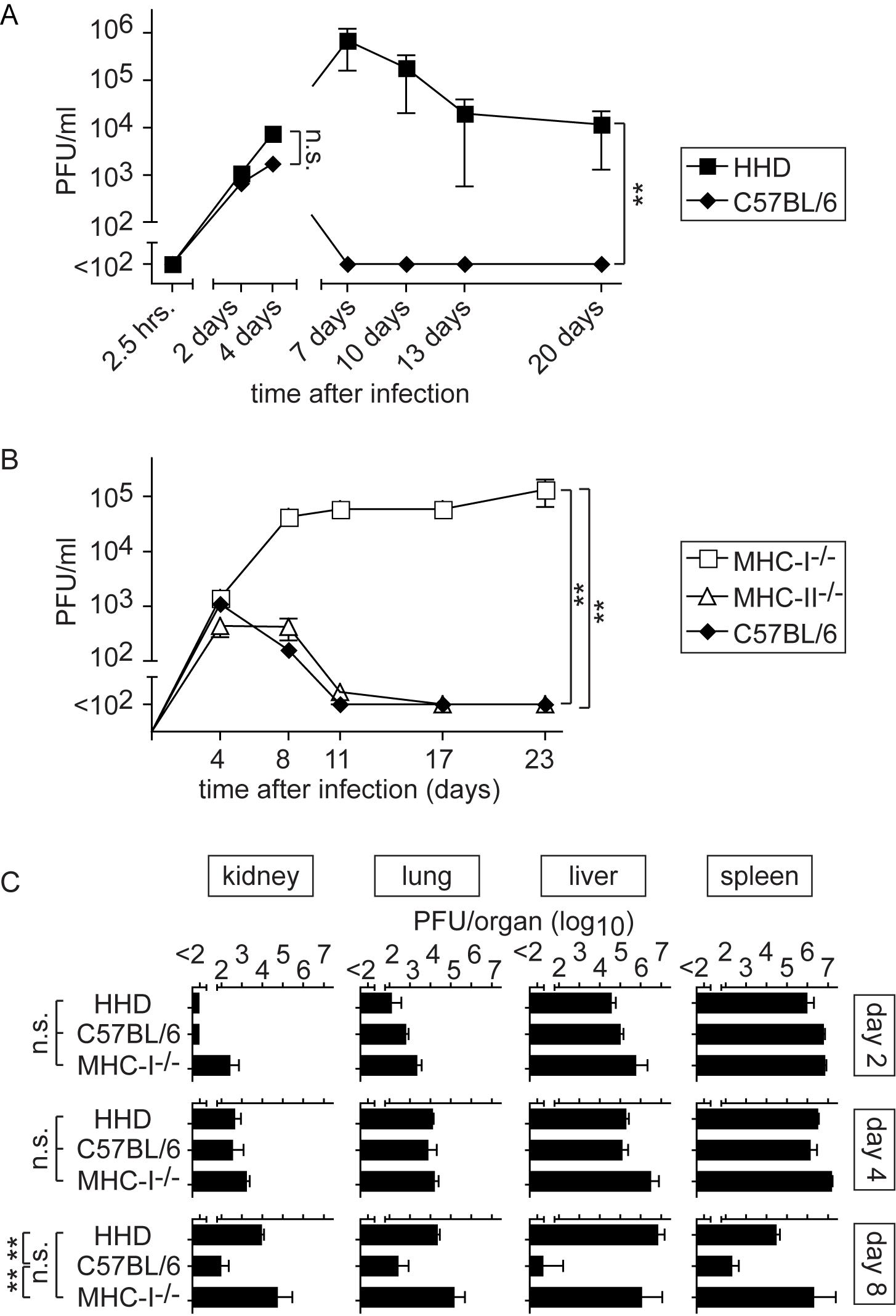 MHC-I but not MHC-II determines efficient LASV control.