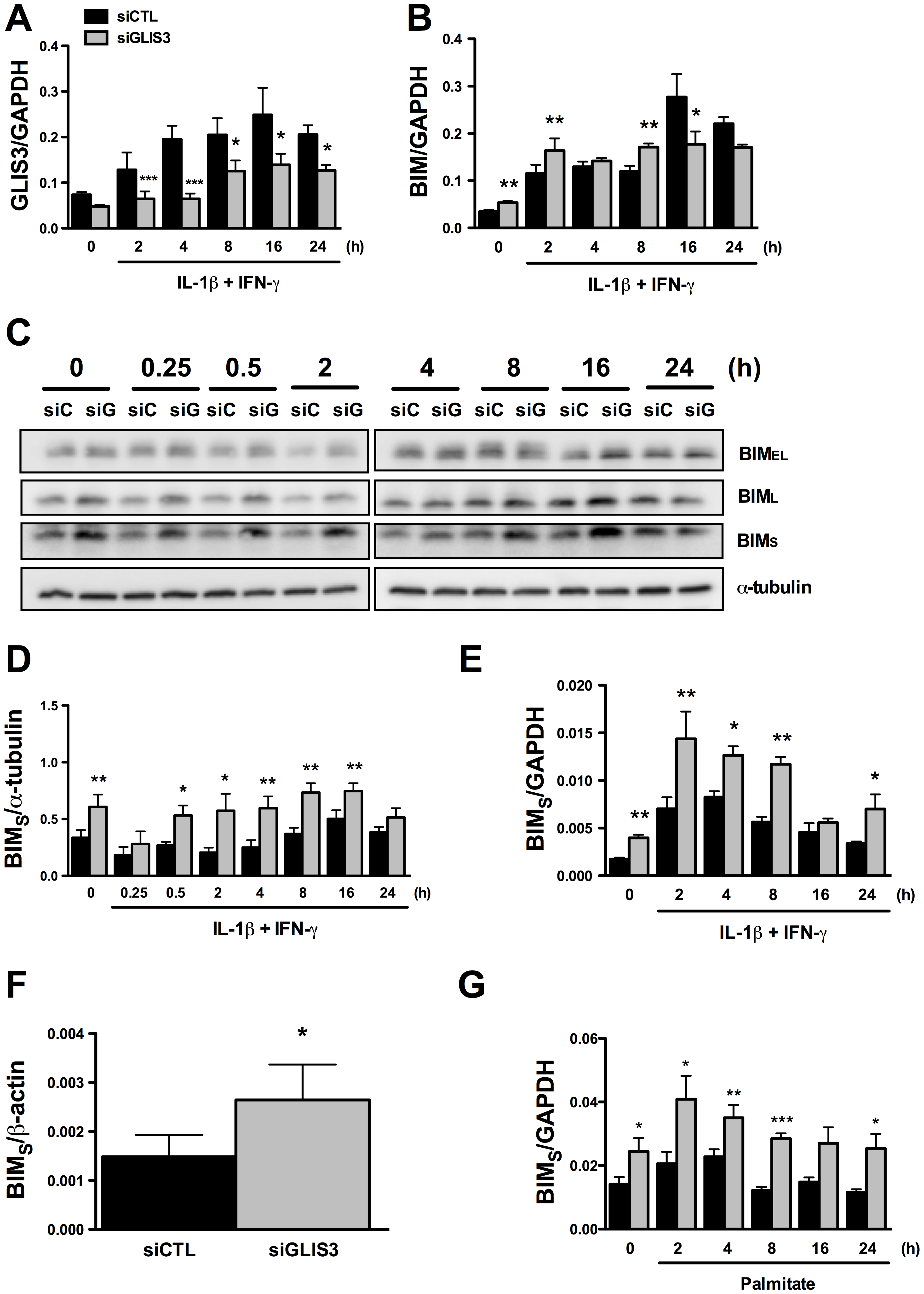 <i>GLIS3</i> KD induces <i>Bim</i> expression in INS-1E and human dispersed islet cells.