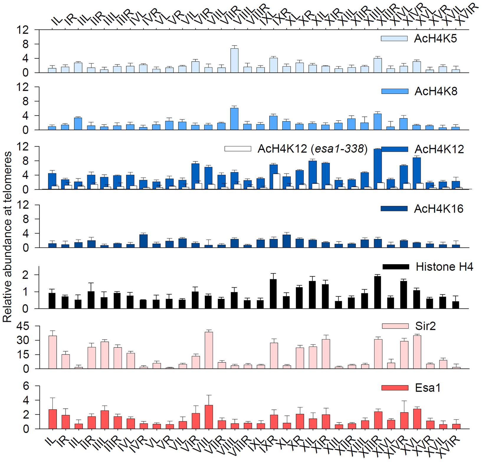 Acetylation of H4K12 at native telomeric heterochromatin.