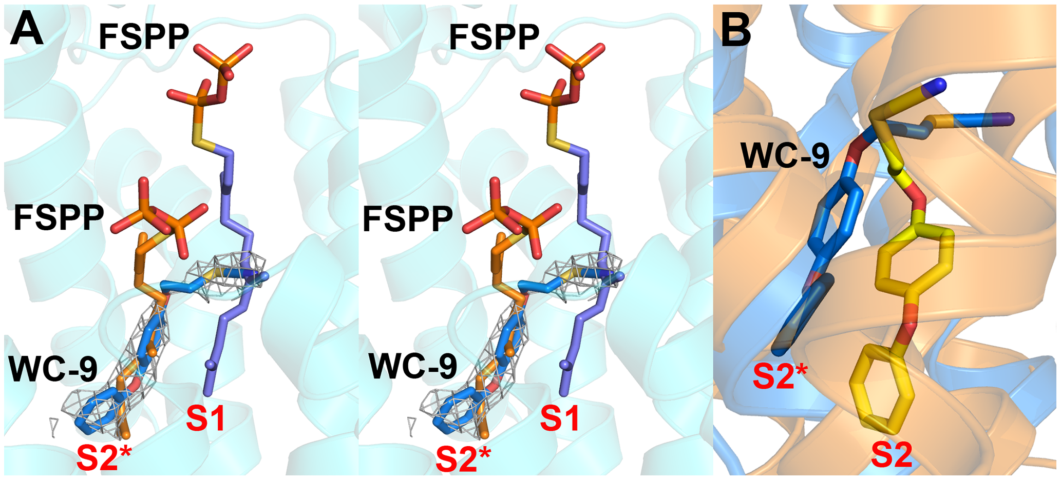Structures of WC-9 bound to HsSQS and CrtM.