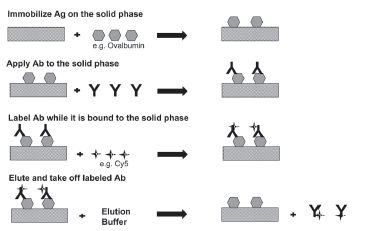 Fig. 5. Affinity protection chromatography
