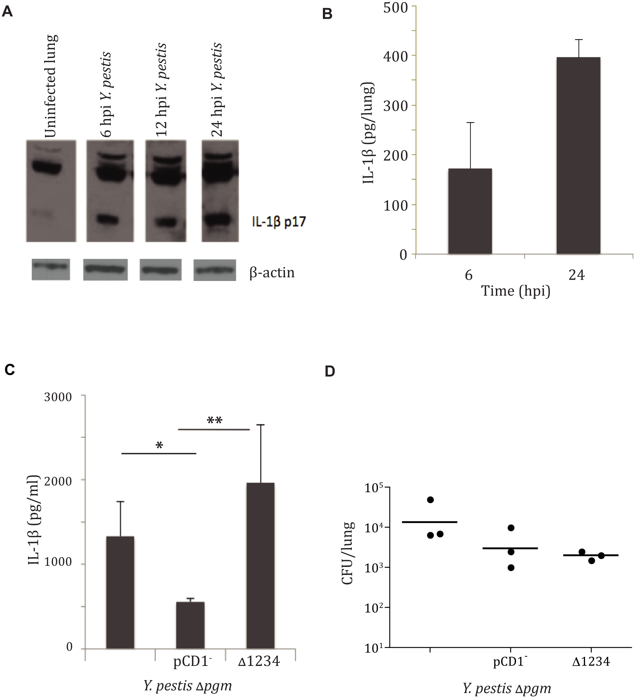 <i>Yersinia pestis</i> type III injectisome activates IL-1β and IL-18 cytokines early during lung infection.