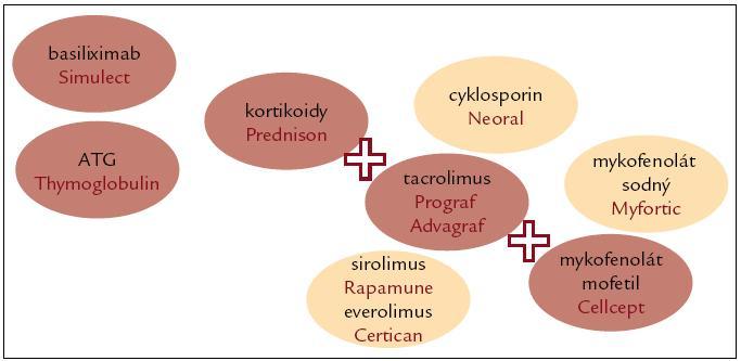 Imunosuprese u transplantace ledviny.