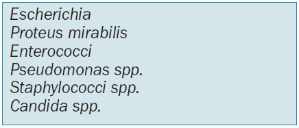 Nejčastější patogeny způsobující nozokomiální infekci močových cest a ranných infekcí.