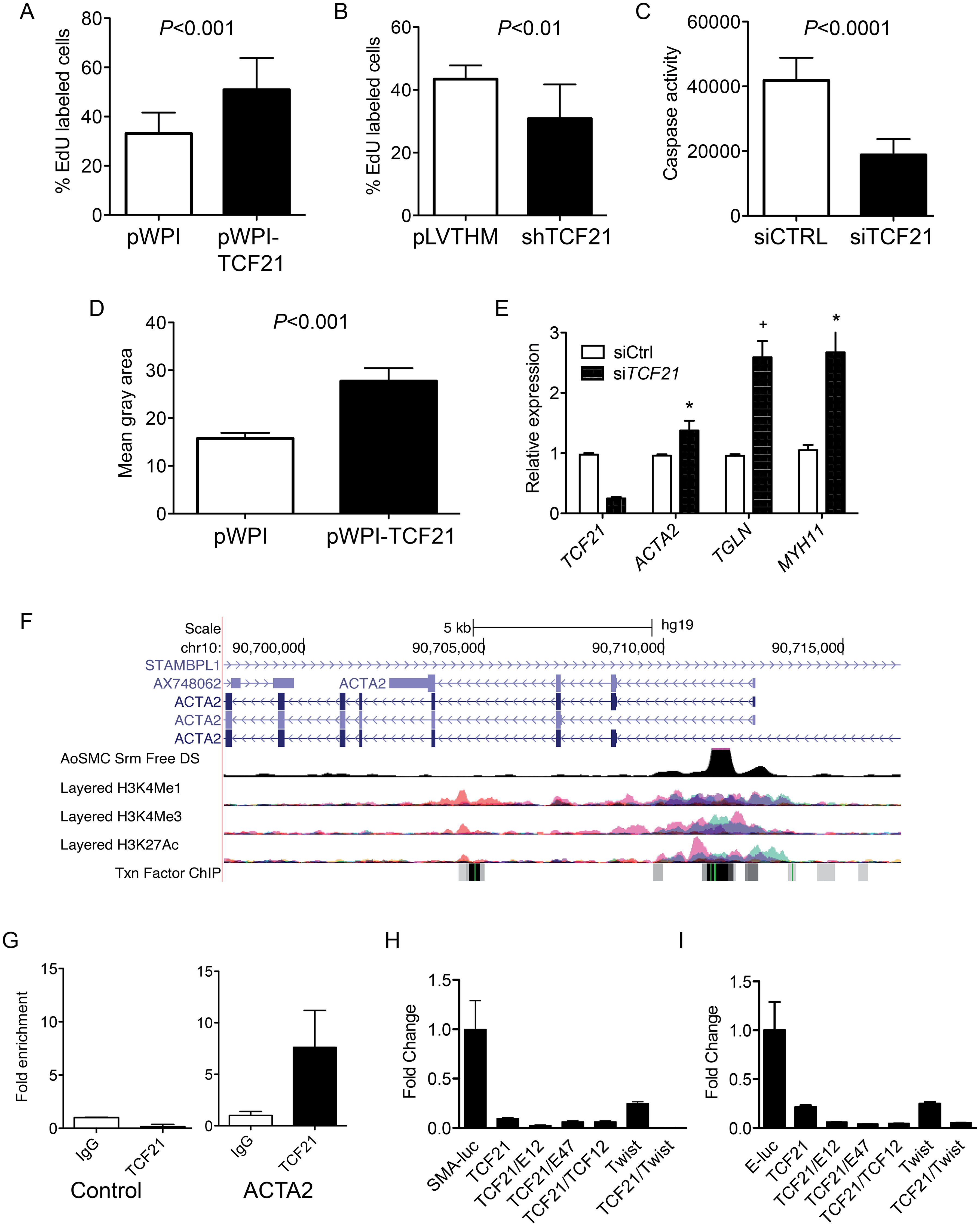 <i>TCF21</i> regulates basic cellular functions in vascular smooth muscle cells <i>in vitro</i>.