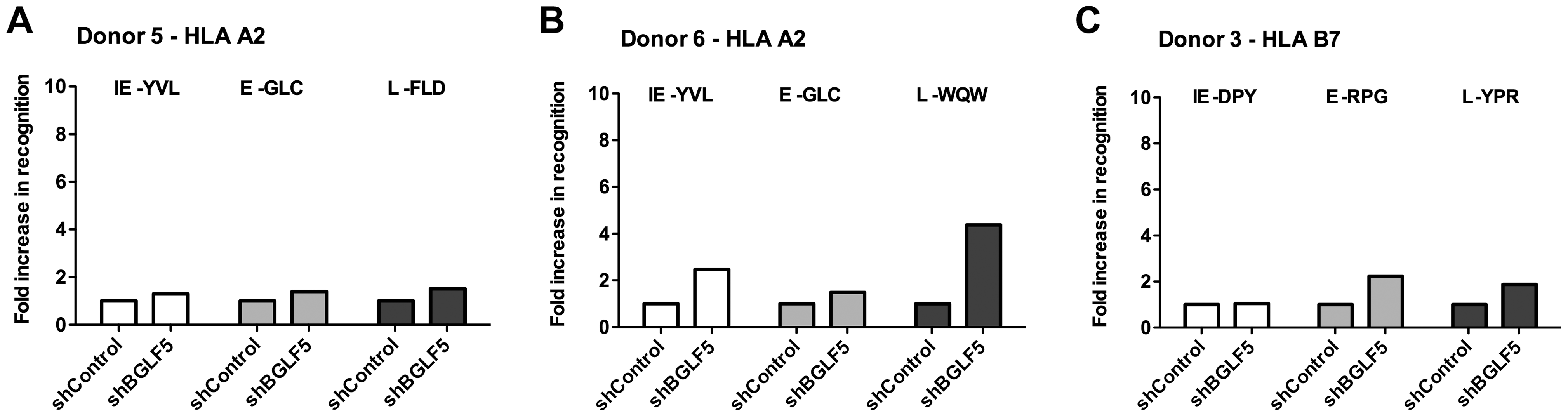 BGLF5 knockdown results in minimal increases in epitope recognition.