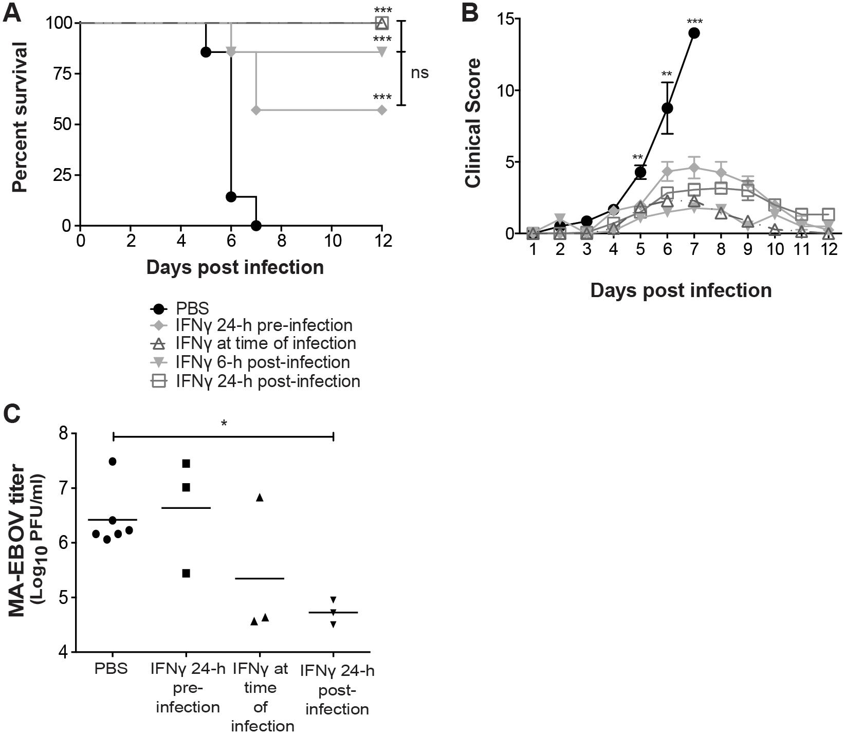 IFNγ protects mice from EBOV morbidity and mortality.