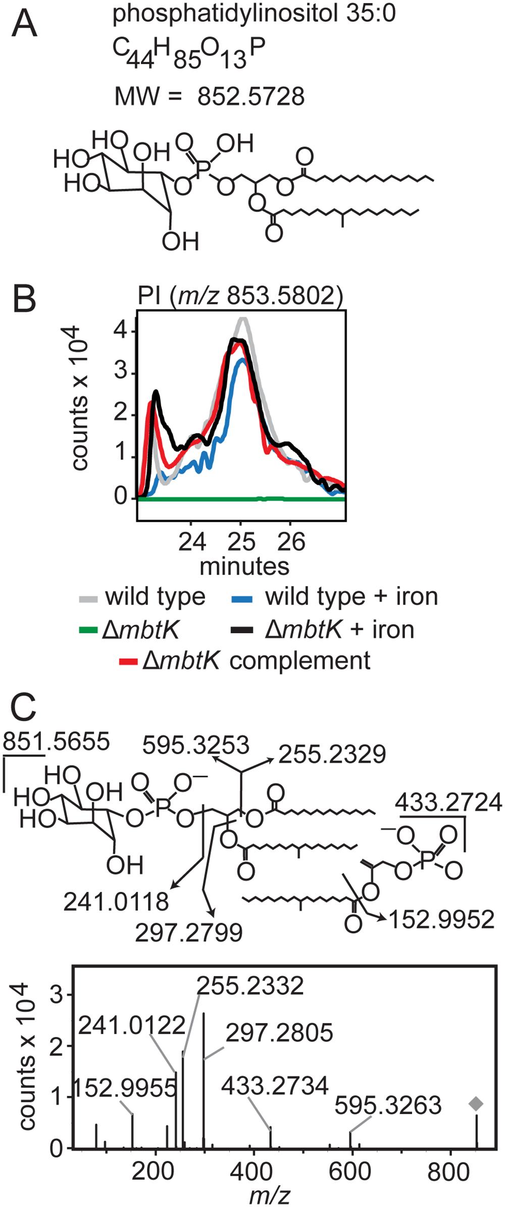 <i>mbtK</i> deletion depletes phosphatidylinositol during iron starvation.
