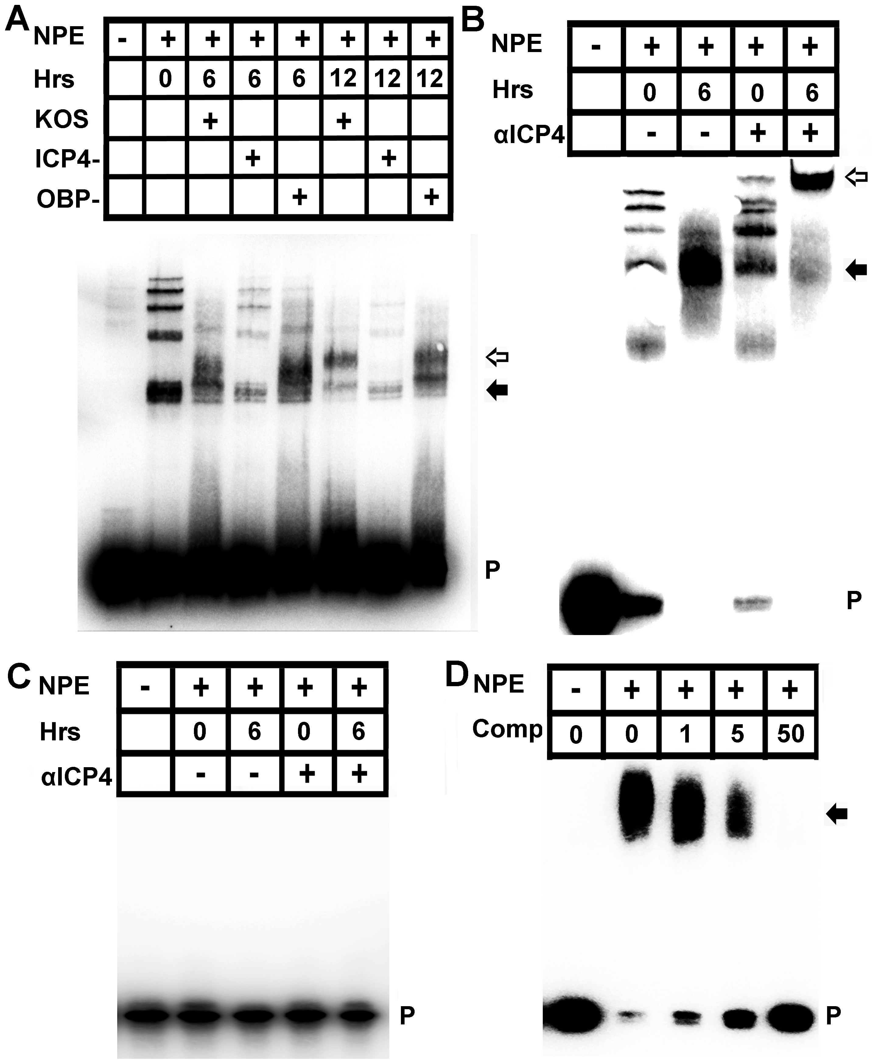 ICP4 binds the human VEGF-A promoter.
