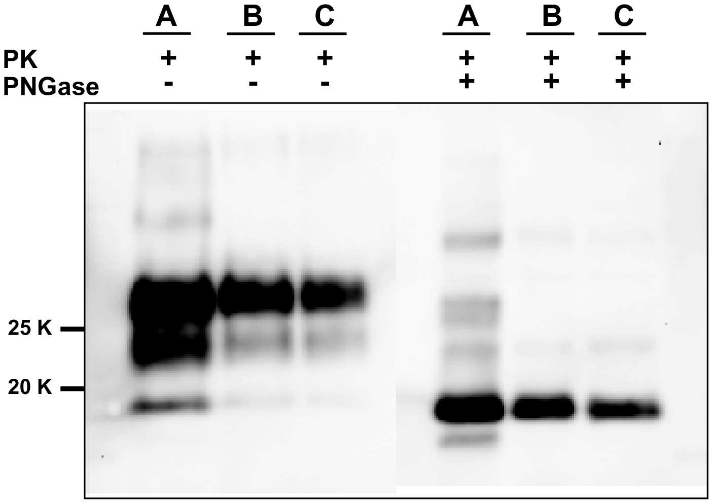 Comparison between PrP<sup>Sc</sup> from seeded and unseeded PMCA reactions.