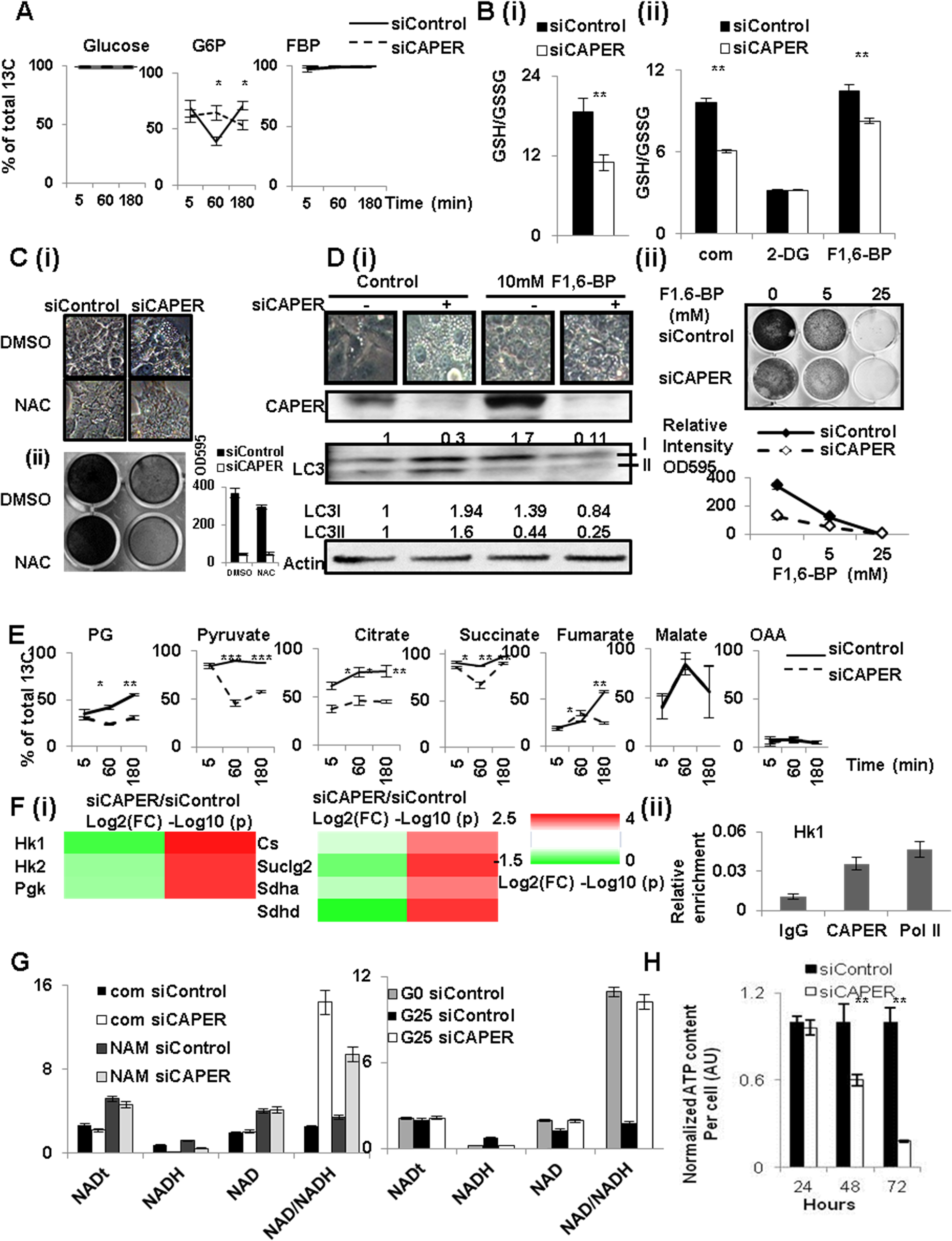 CAPER deficiency decreased carbon flux into glycolysis and TCA cycles leading to defective compensatory mitochondrial respiratory responses.