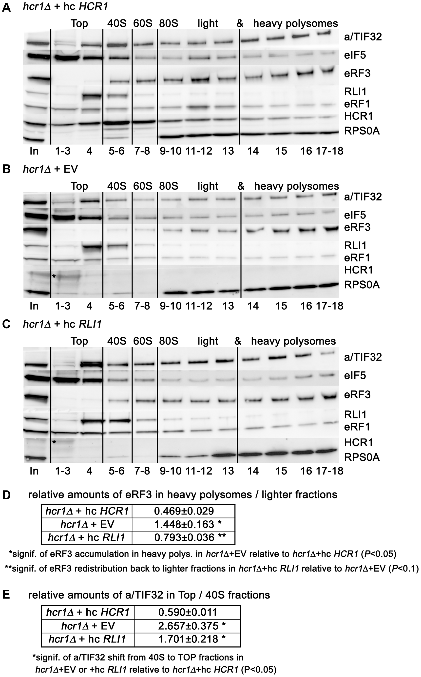 Deletion of <i>hcr1</i> results in accumulation of eRF3 in heavy polysomes.