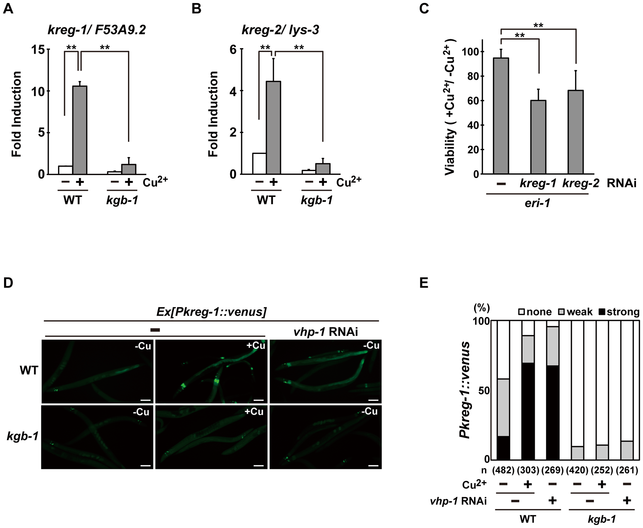The KGB-1 pathway regulates expression of <i>kreg</i> genes.