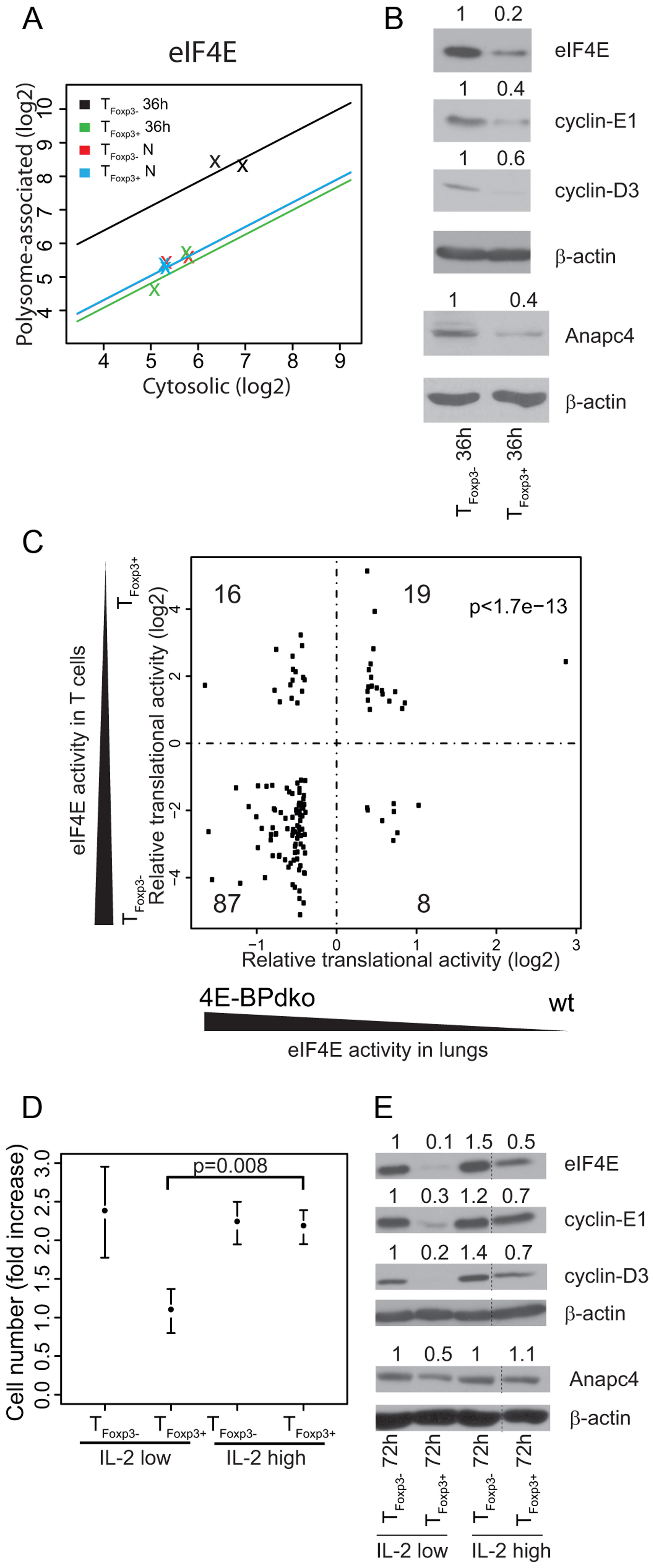 Differential levels of eIF4E between T<sub>Foxp3+</sub> and T<sub>Foxp3−</sub> cells partly explain their translational signature and correlate with CD4<sup>+</sup> T cell subset proliferation.
