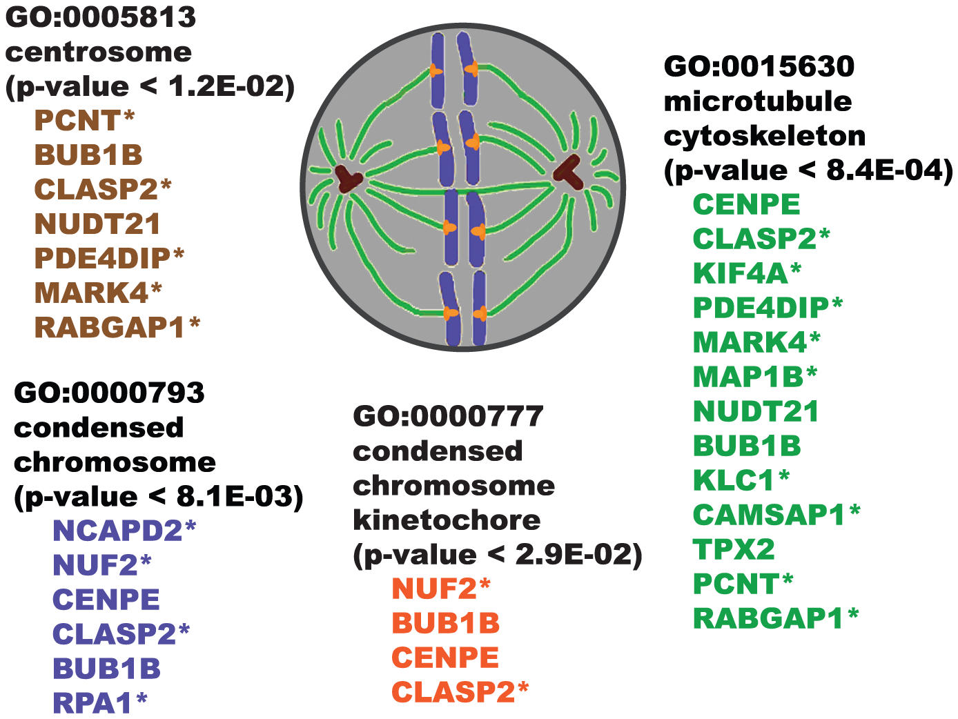"Illustration showing overrepresented GO ""cellular component"" categories for SWI/SNF co-purifying proteins."