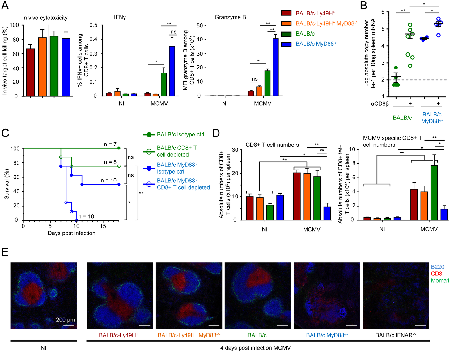 Impact of MyD88 or Ly49H deficiencies on antiviral CD8 T cell responses.