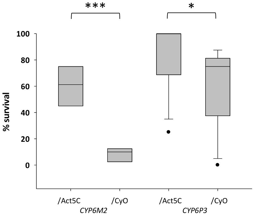 Survival of transgenic <i>Drosophila</i> expressing <i>An. gambiae Cyp6M2</i> or <i>CYP6P3</i> in the presence of bendiocarb.