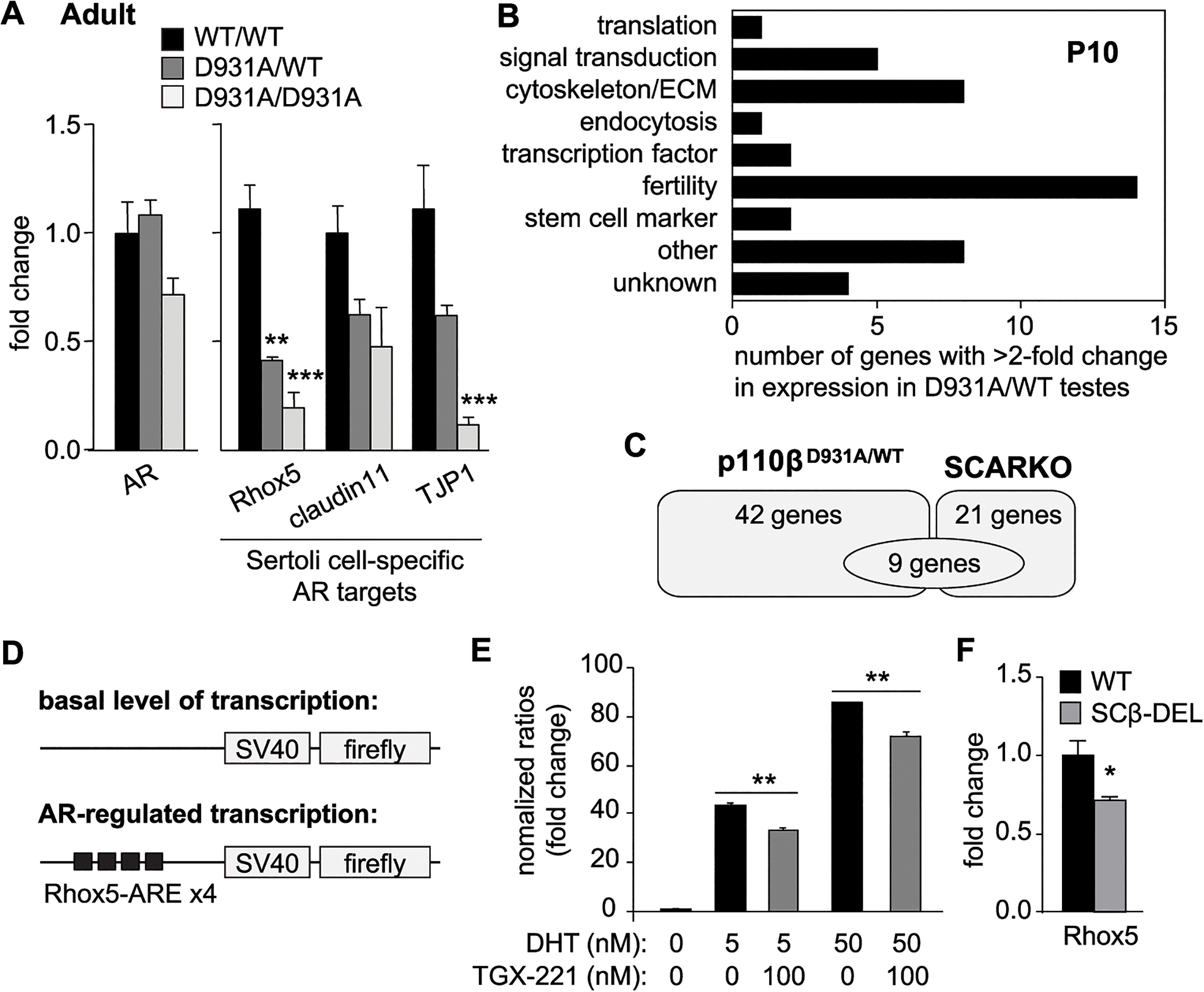 p110β activity regulates AR mRNA targets specifically in SCs.